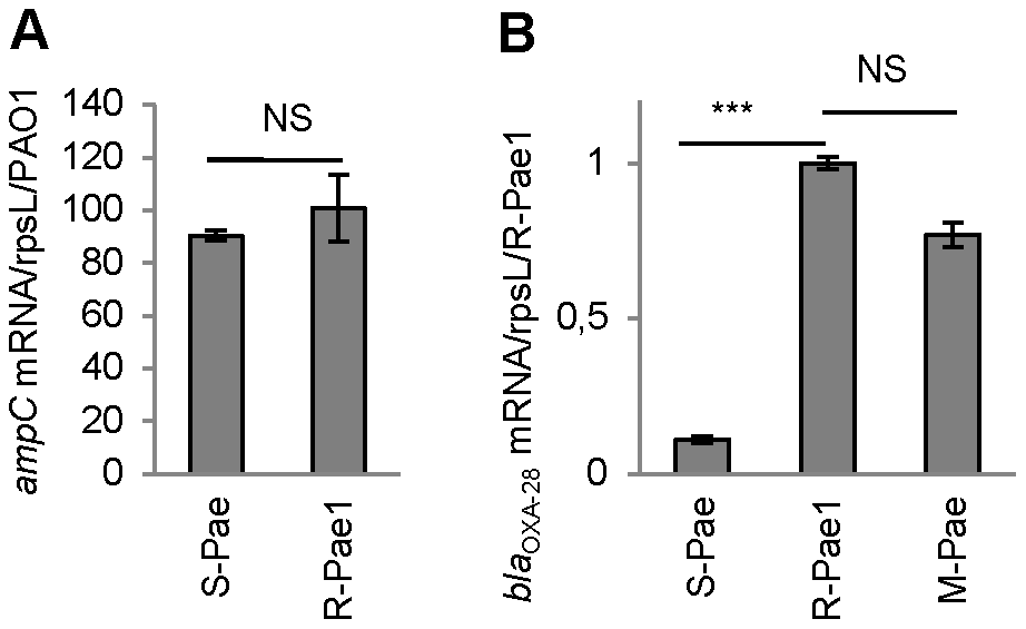 <i>gcuF1</i> excision enhances the expression of <i>bla</i><sub>OXA-28</sub>.
