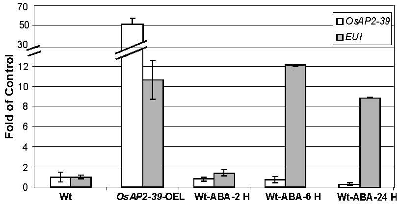 Exogenous application of ABA induced <i>EUI</i> in the wild-type rice leaves.