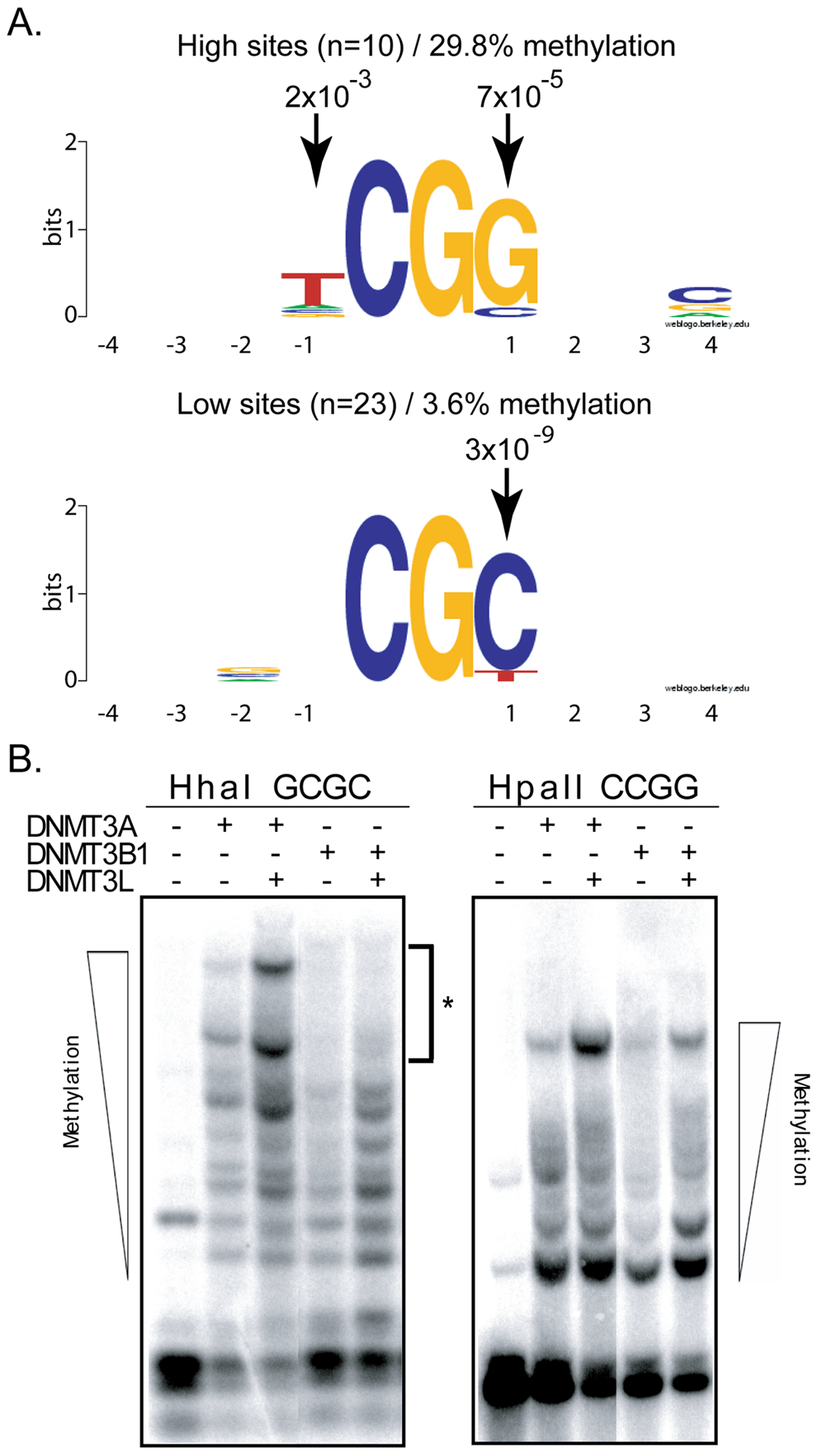 DNMT3B shows selectivity for residues flanking the target CpG site at positions −1 and +1.