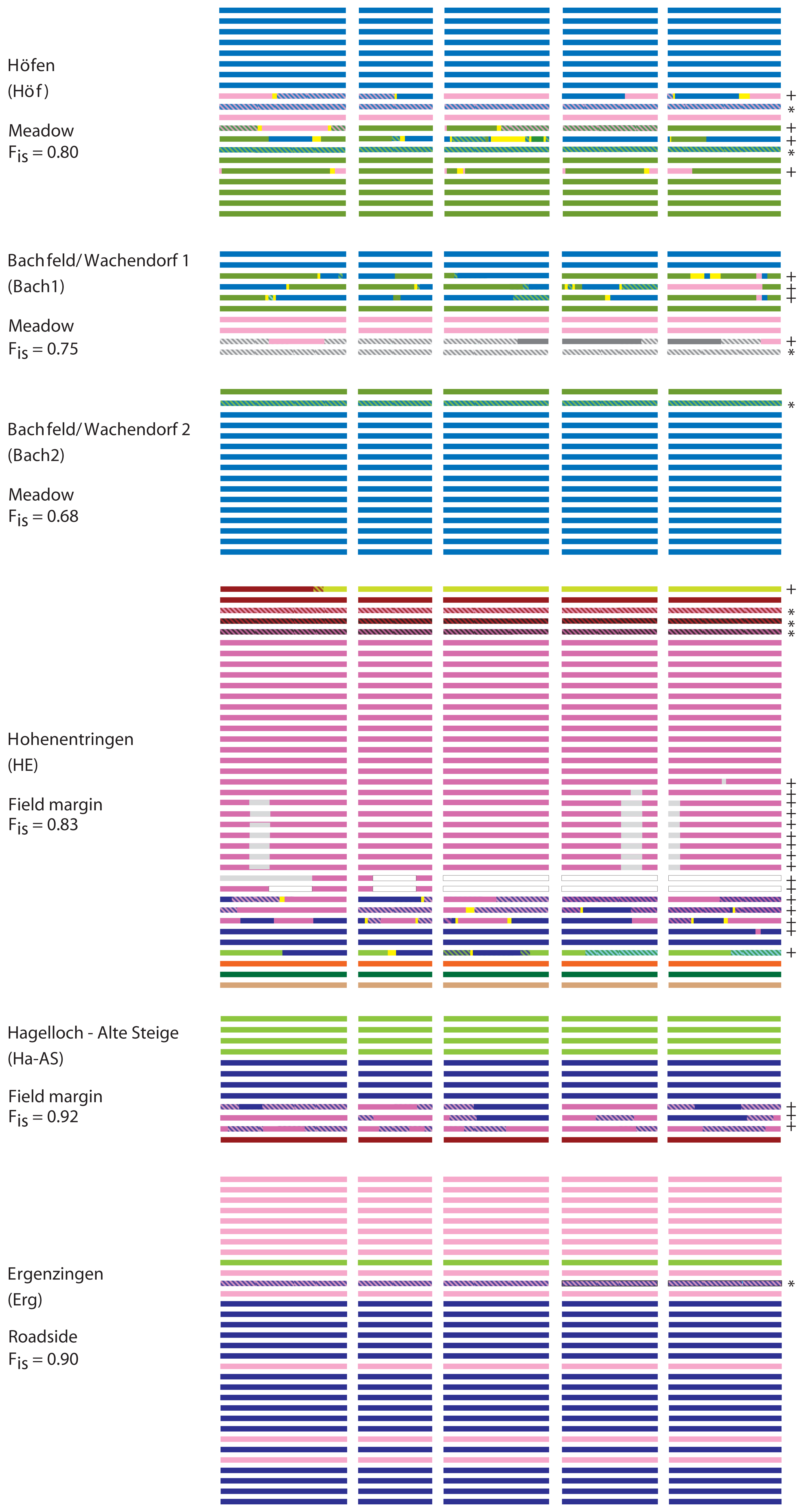 Diagram of haplotype block identity and recombination patterns in several rural stands.