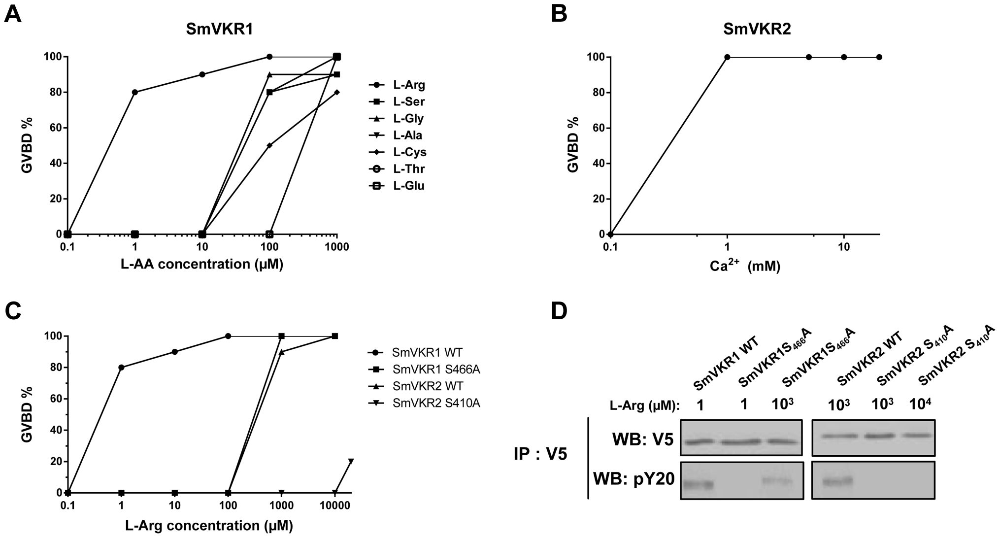 Ligand determination of SmVKR1 and SmVKR2. Importance of a conserved Ser residue of the VFT domain in amino-acid binding and activation of the receptors.