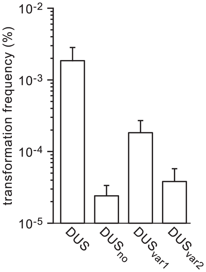Naturally occuring DUS variants in human <i>Neisseria</i> commensals are impaired for enhancement of transformation in <i>N. meningitidis</i>.