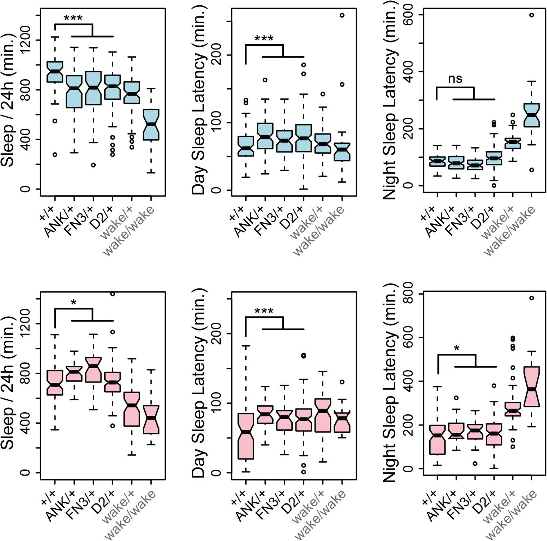 <i>CG45058</i> null heterozygotes have abnormal sleep patterns.