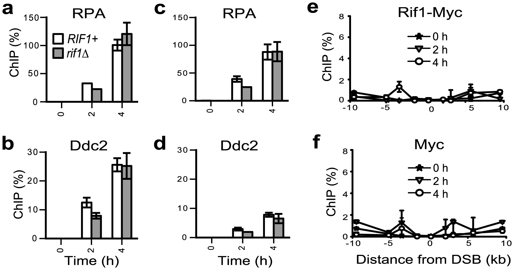 Rif1 does not associate with an HO-induced DSB. Strains were grown overnight on raffinose; galactose was added to the medium at time 0 and samples collected every 2 hours.