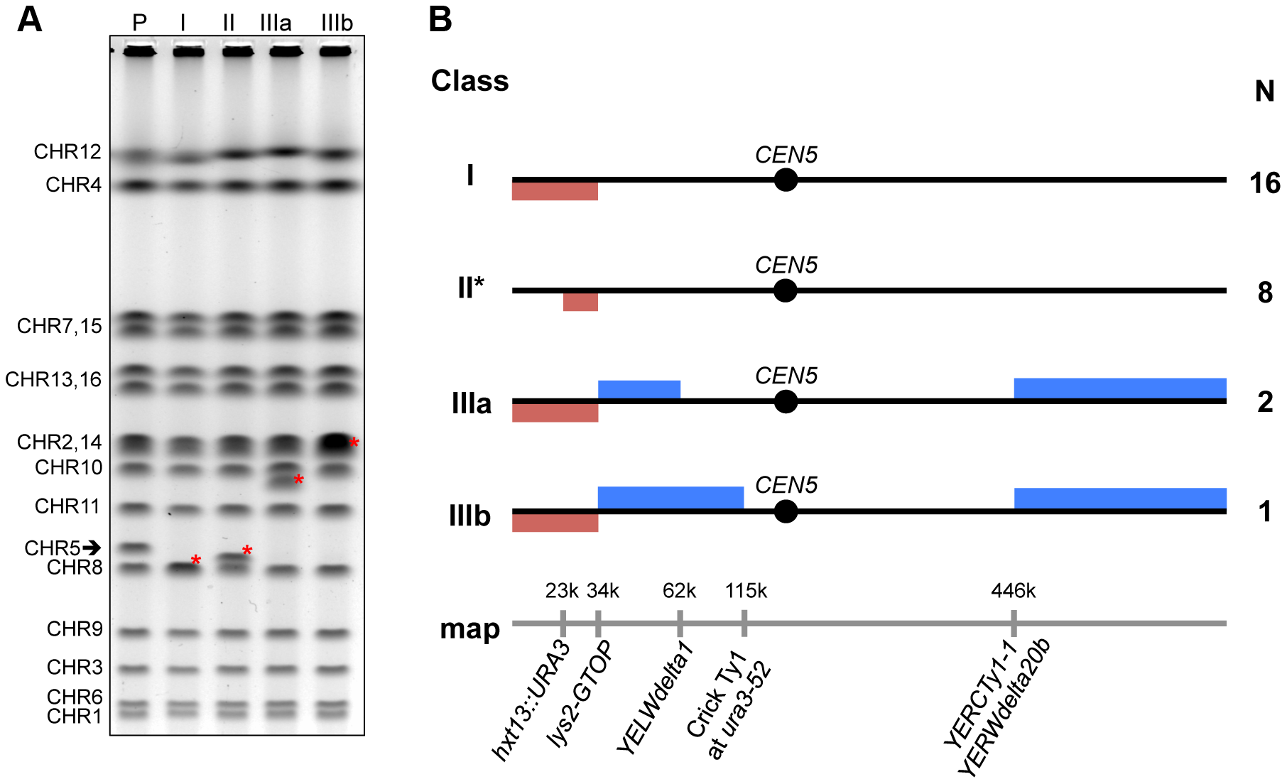 Classes of GCRs associated with the highly transcribed G4 DNA motif.