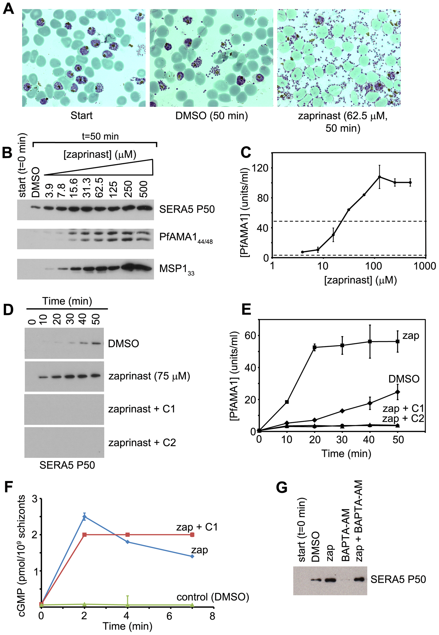 The phosphodiesterase inhibitor zaprinast induces premature egress in a cGMP-dependent manner.