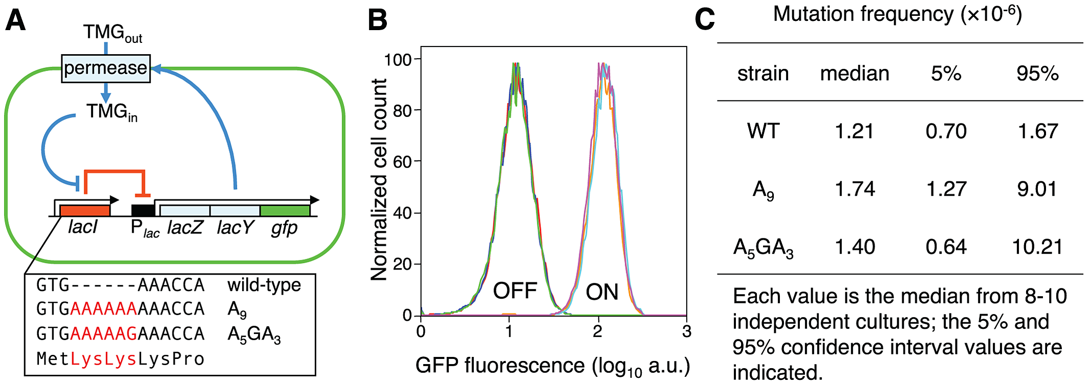 Novel system to study the consequences of error-prone transcription sequences.