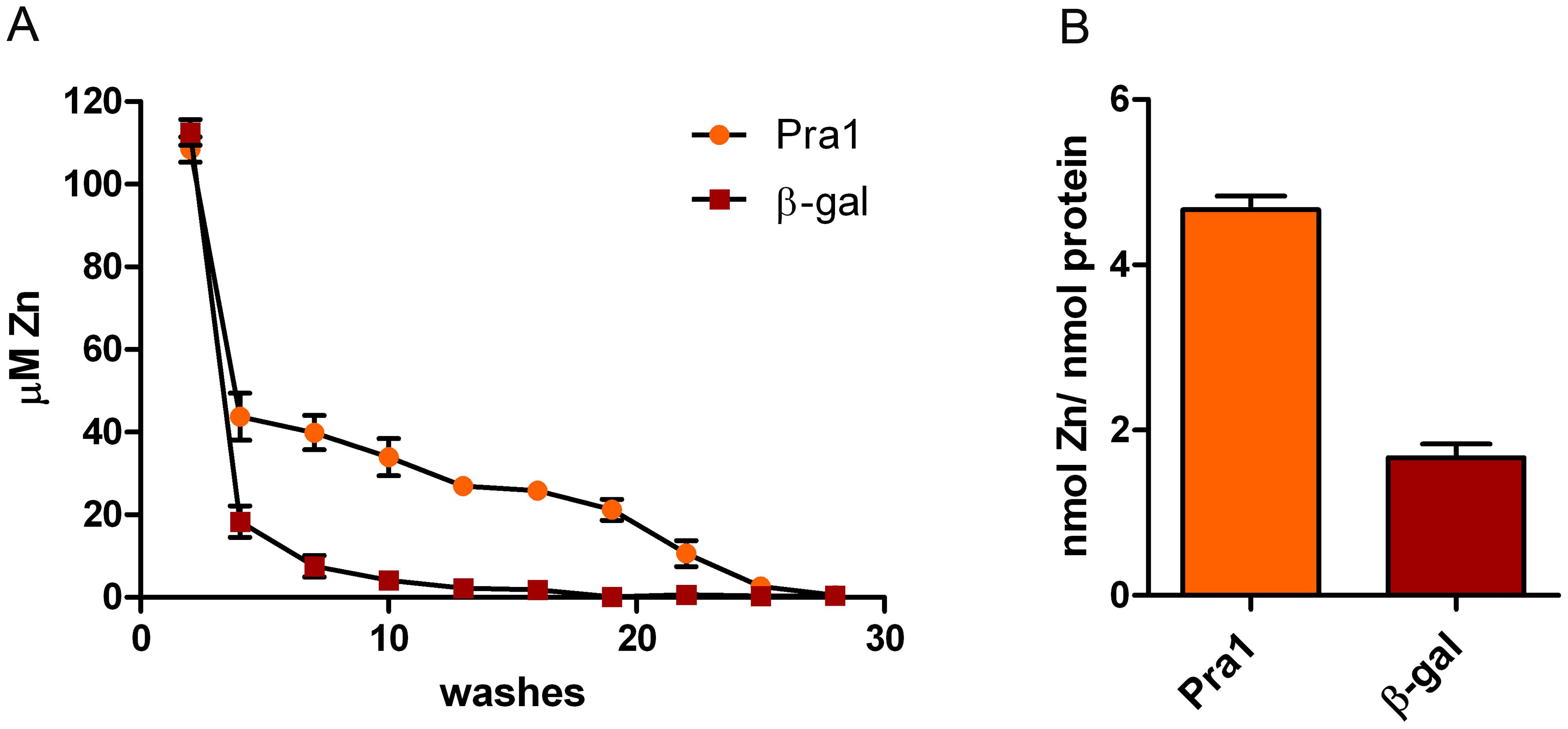 Pra1 is a zinc binding protein.