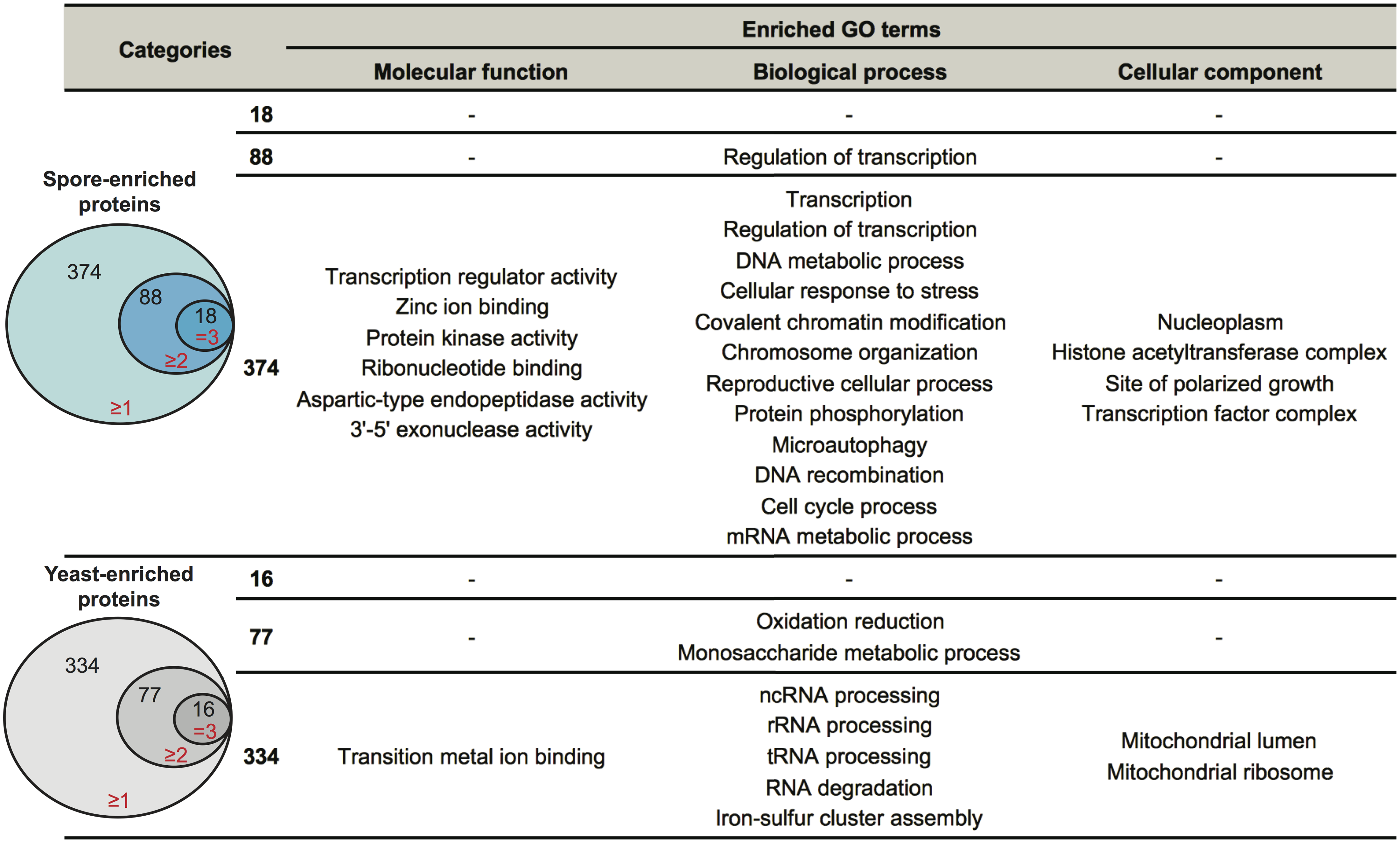 Enriched biological processes in spore-enriched or yeast-enriched proteins.