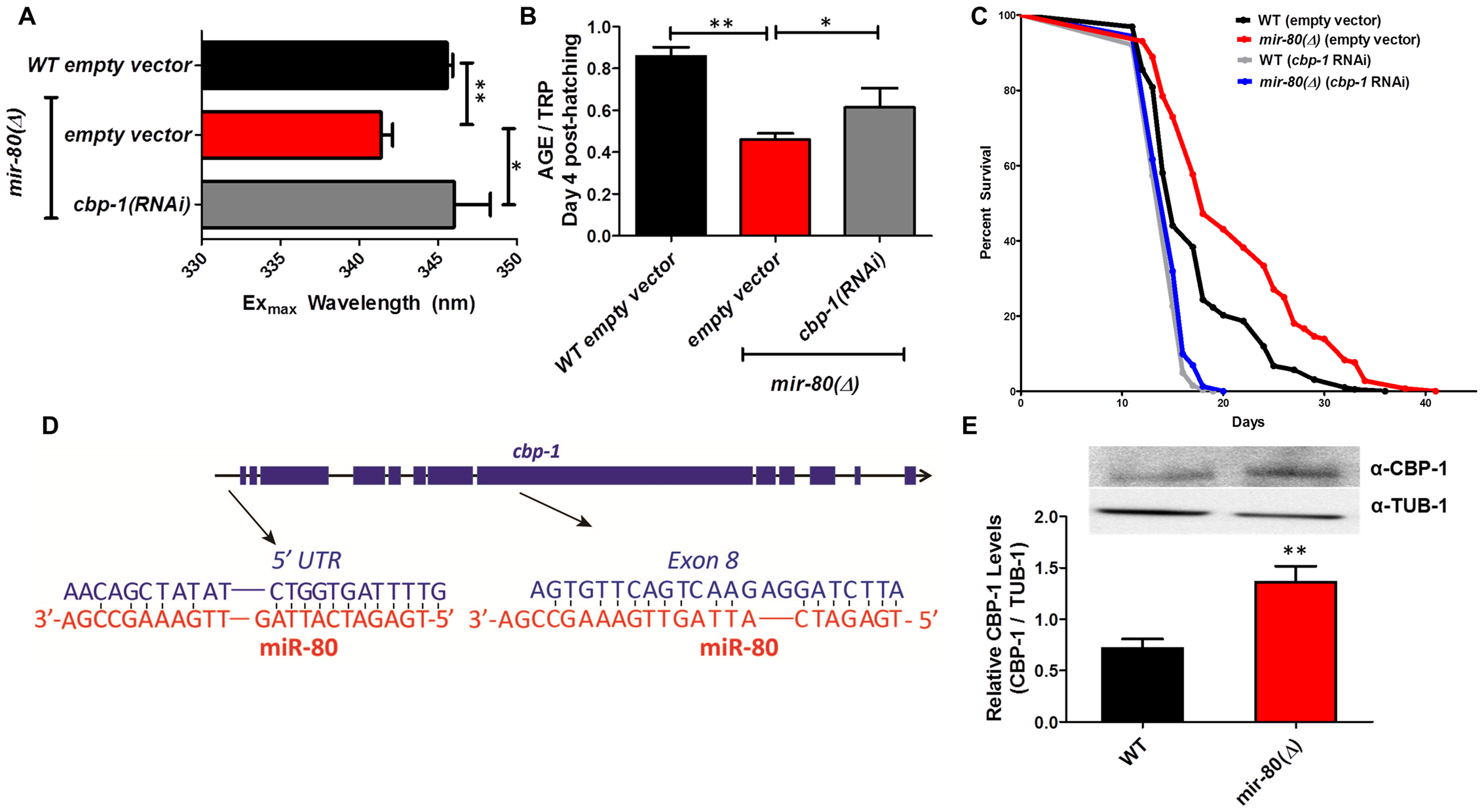 CBP-1 is critical for <i>mir-80</i>(Δ) healthspan benefits, and is a candidate direct binding target of miR-80.