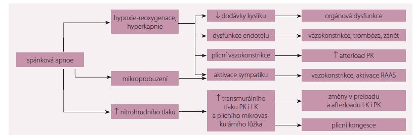 Patofyziologické konsekvence spánkové apnoe. Upraveno dle [2].