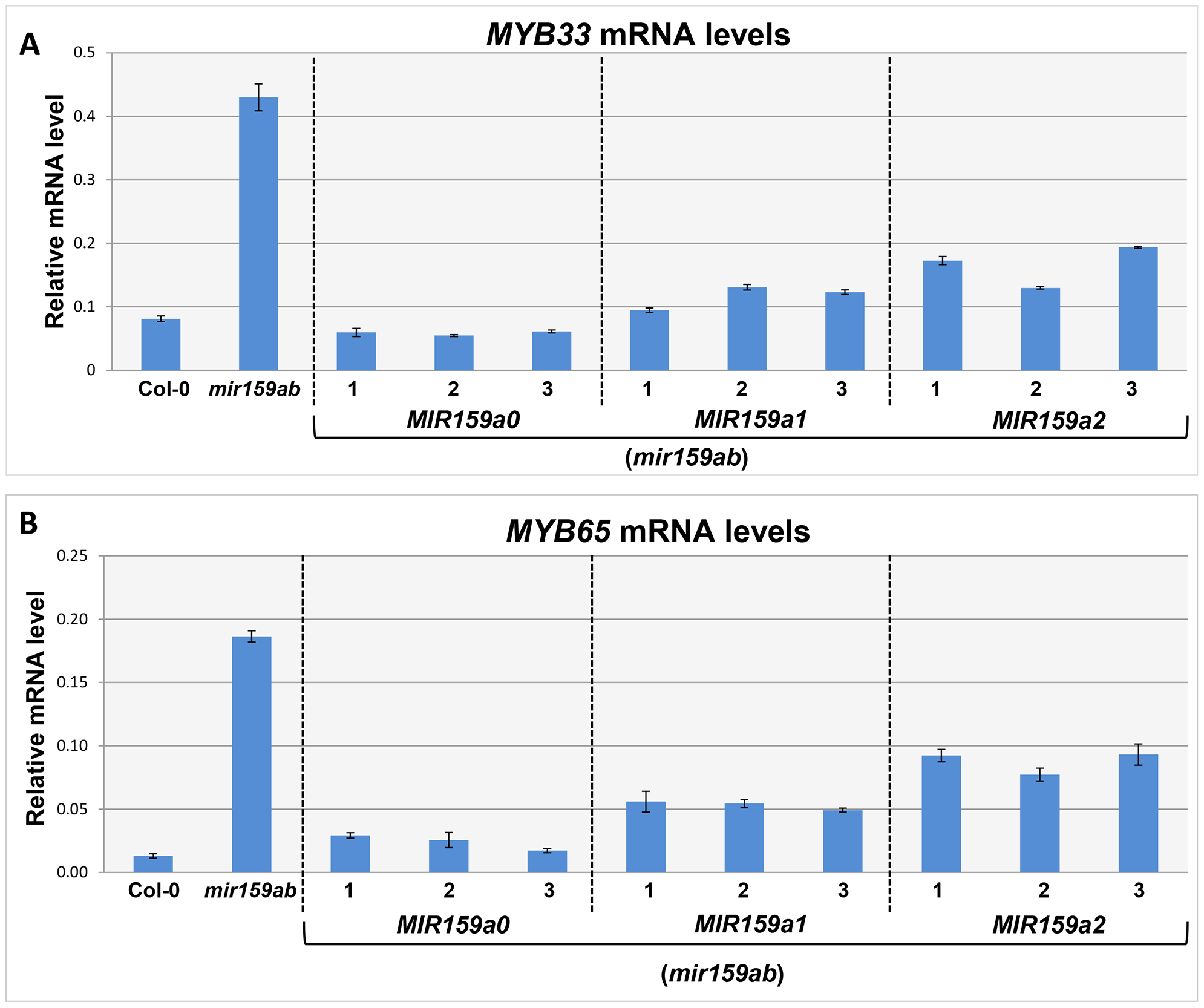 MiR159a1 and miR159a2 repress the endogenous <i>MYB33/MYB65</i> mRNA levels.