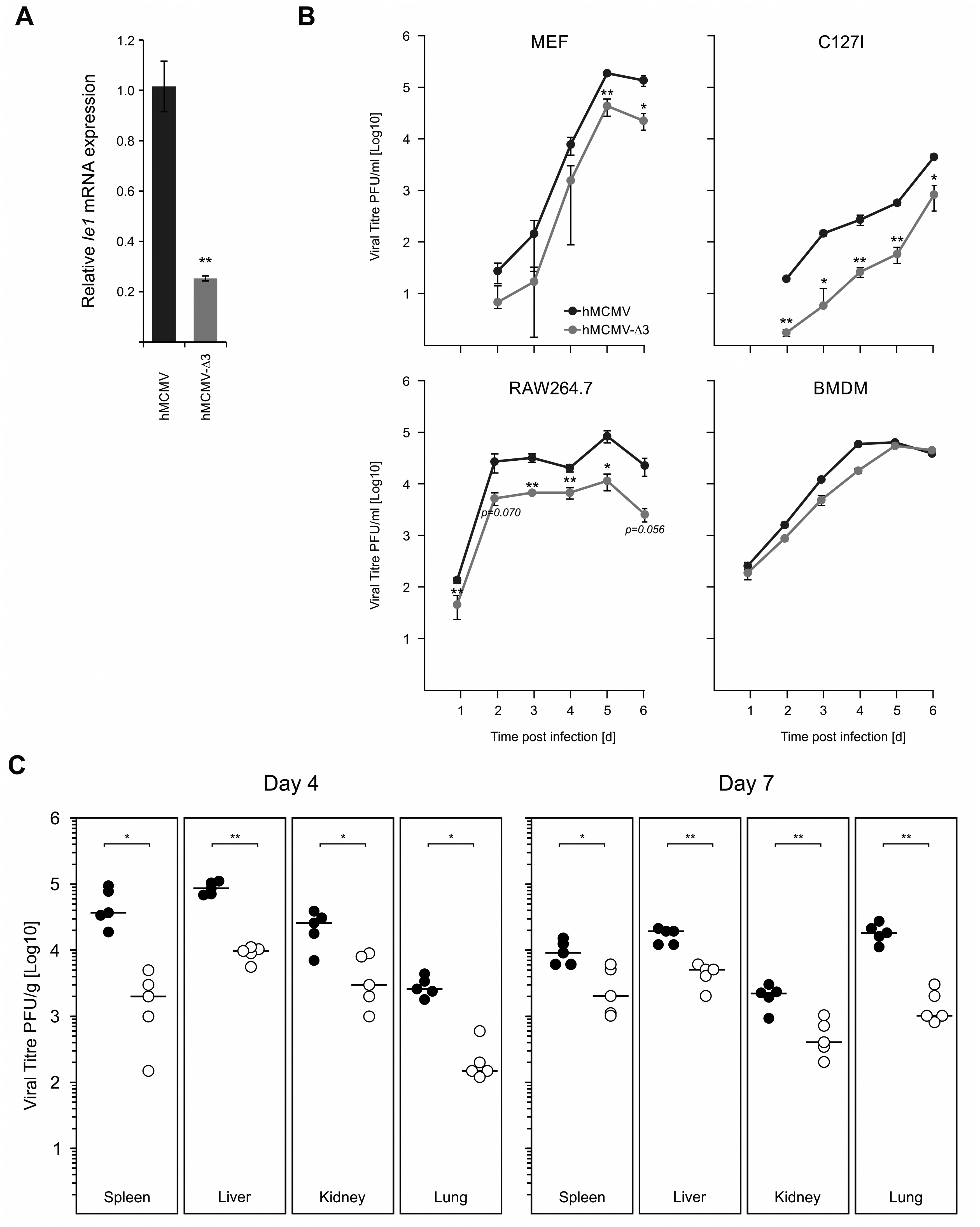 Loss of TLR-activated transcription factor binding motifs has impacts on viral replication and fitness.