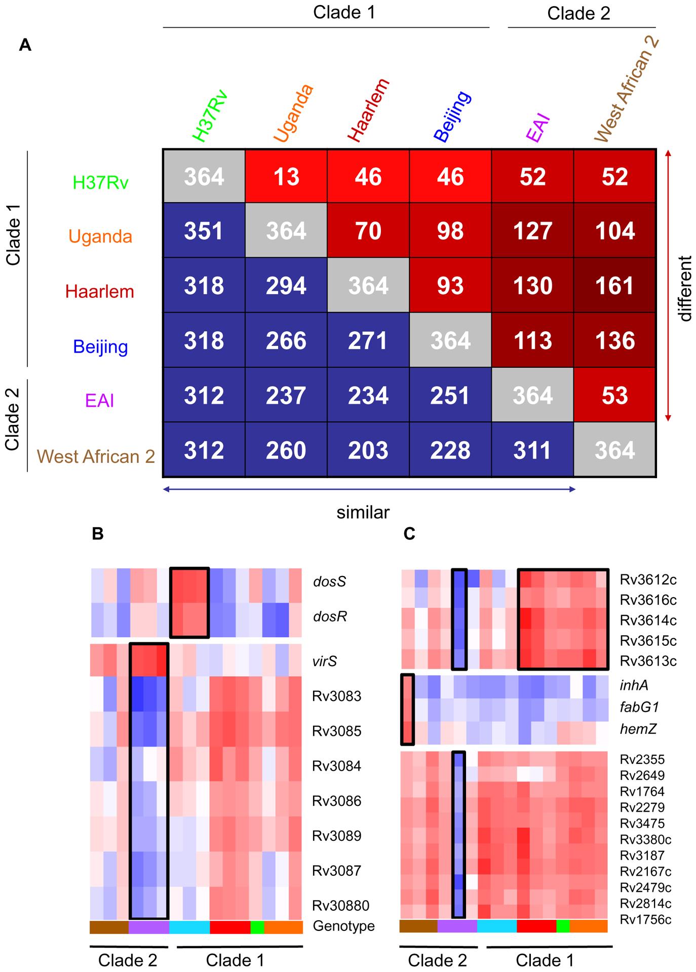 Identification of genotype- and strain- specific <i>in vitro</i> transcription profiles.