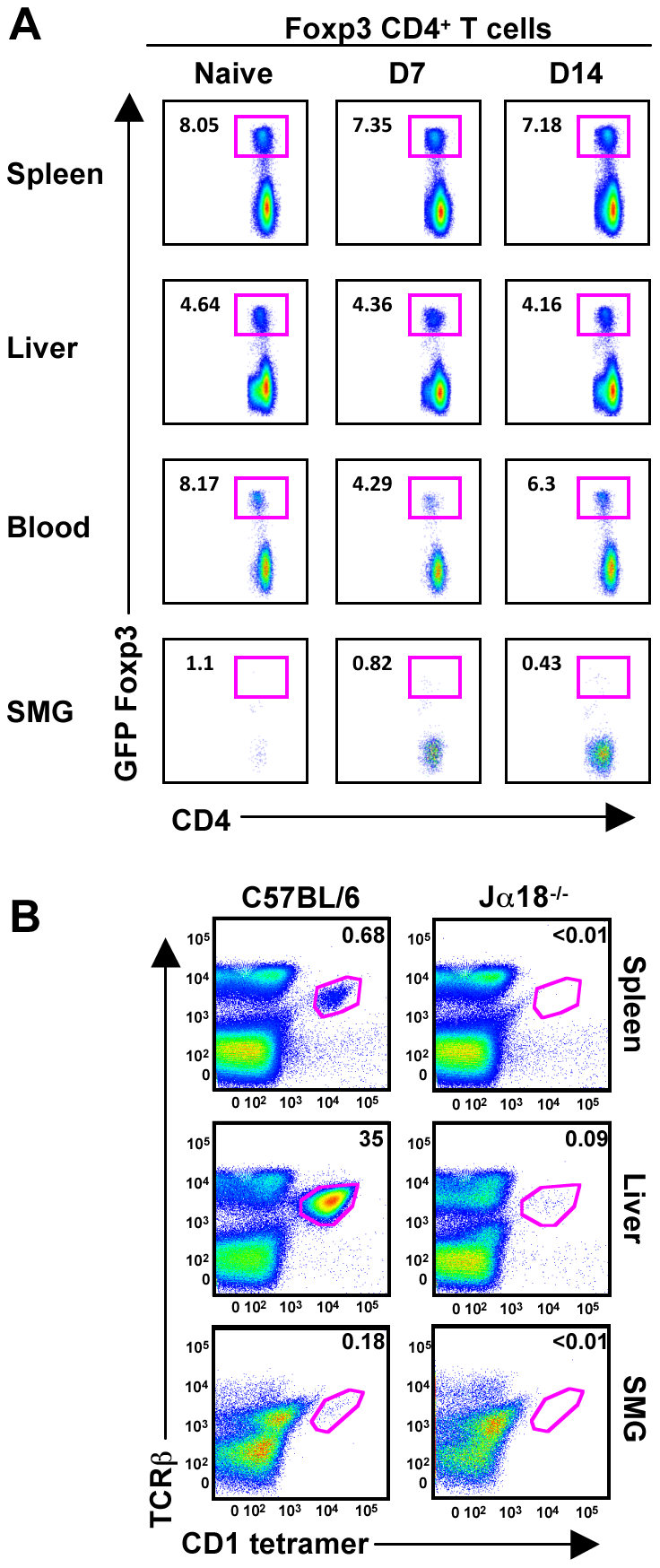 T-regs and <i>i</i>NKT cells are absent from naïve and MCMV infected SMG.
