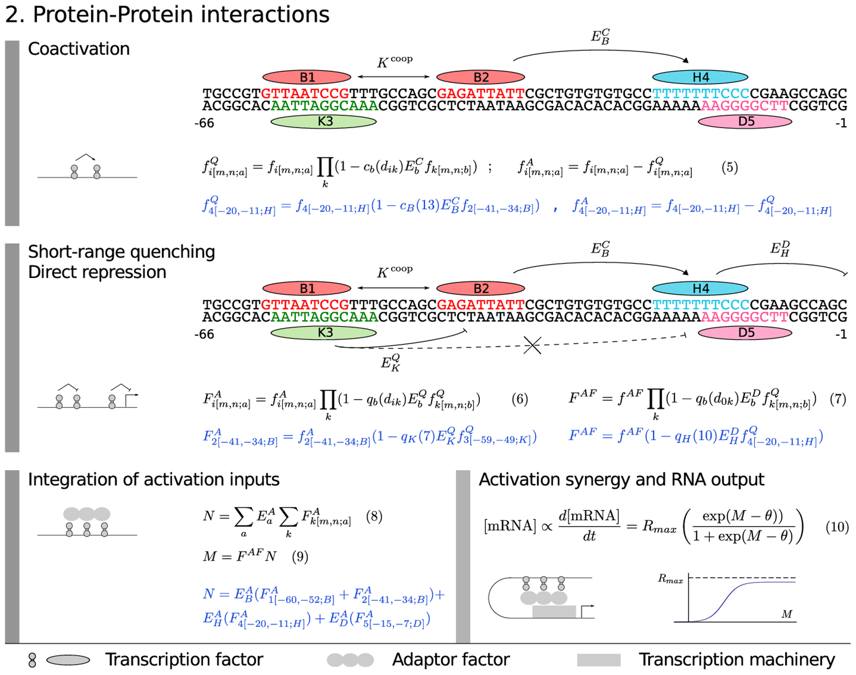 Model equations: protein–protein interactions.