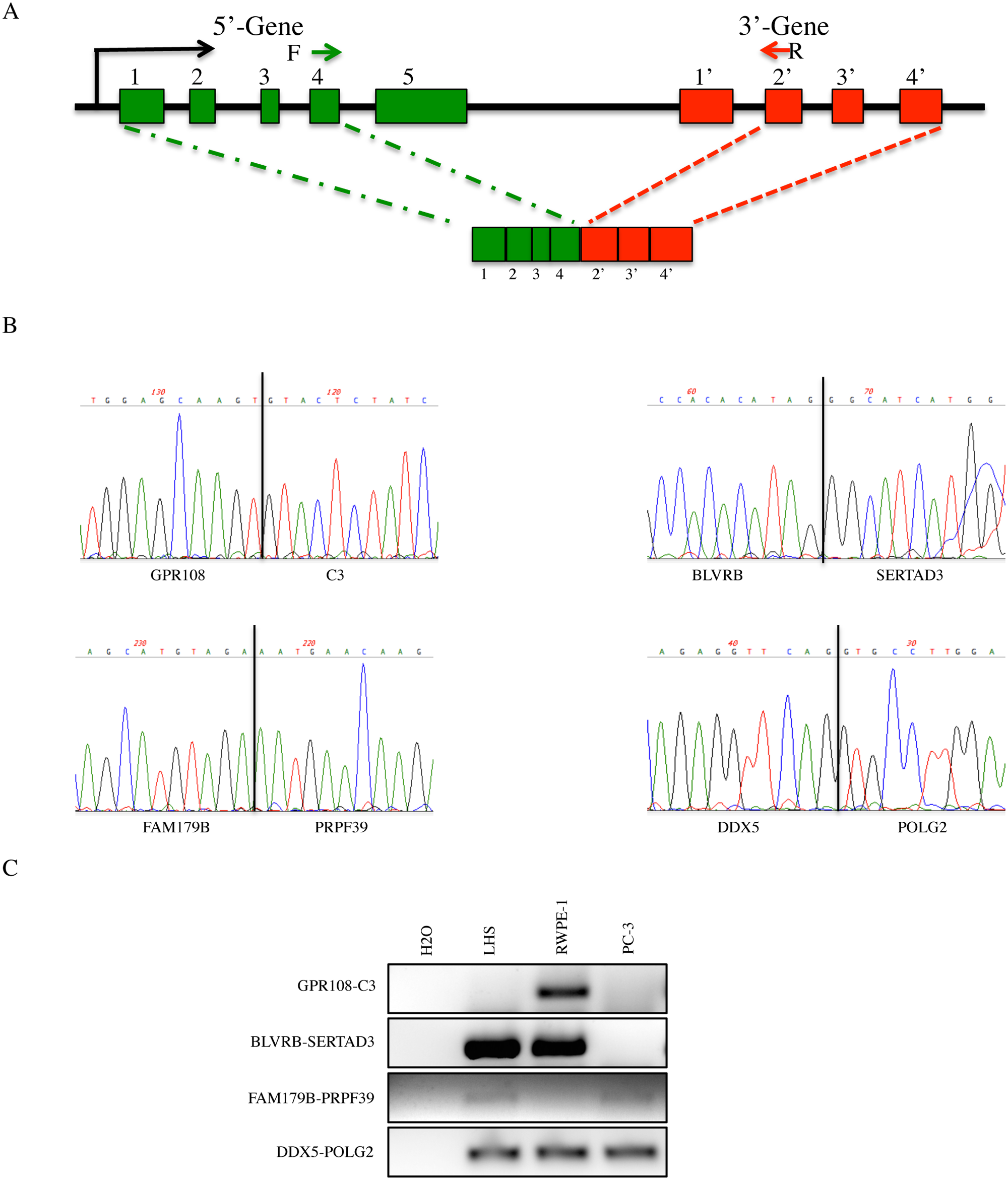 Identification of novel cis-SAGe candidate events.