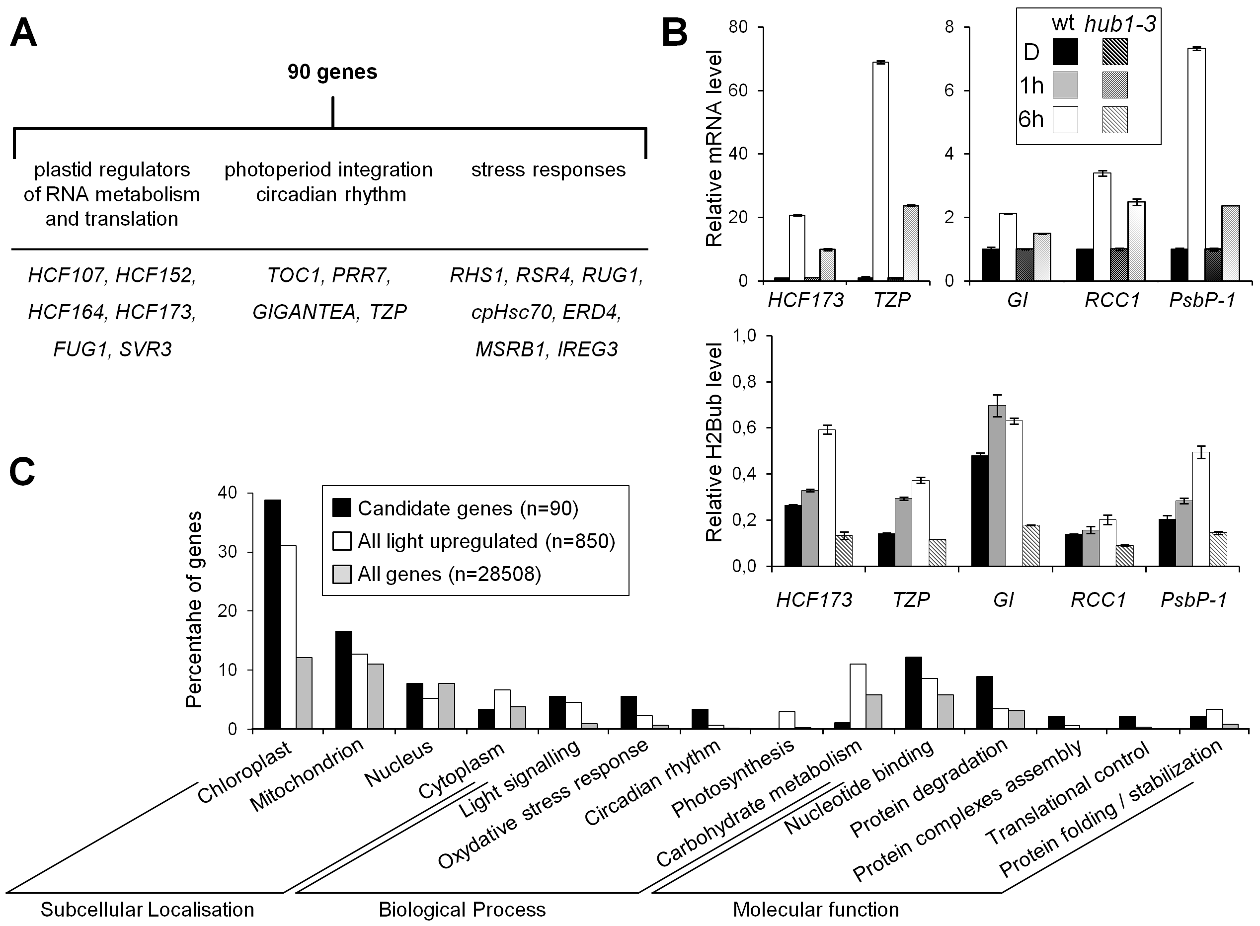 Several genes potentially targeted for H2Bub selective regulation encode regulatory factors of light-driven responses.