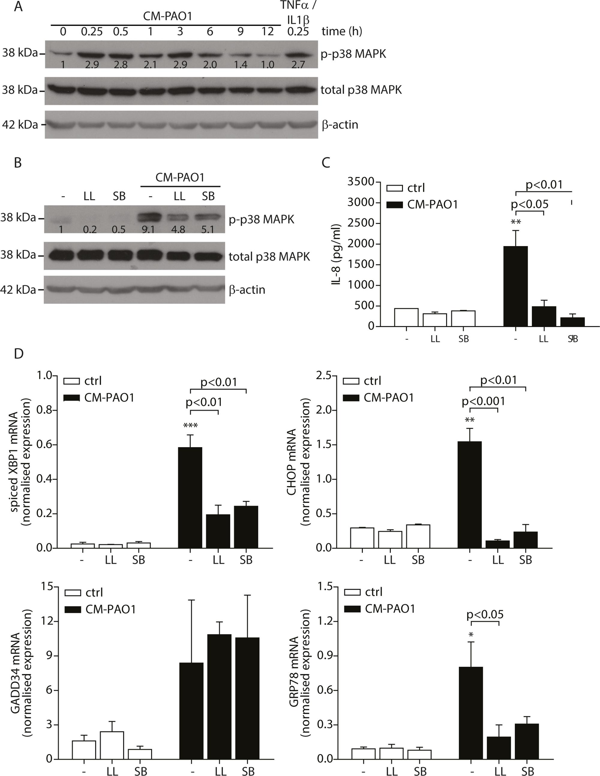 Conditioned medium of <i>P</i>. <i>aeruginosa</i> induces ER stress via TAK1-p38 MAP kinase (MAPK).