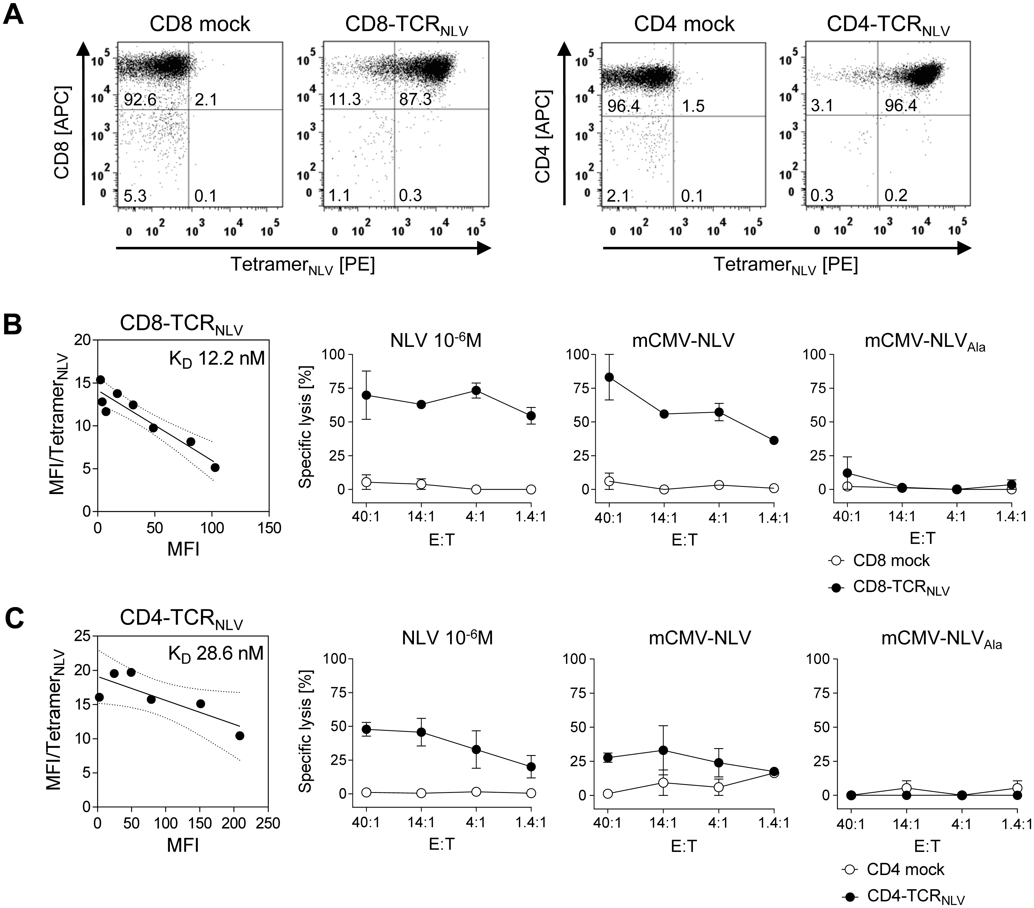 Transgenic TCR<sub>NLV</sub> expression, structural avidity, and cytolytic activity of TCR-transduced human T-cell subsets.