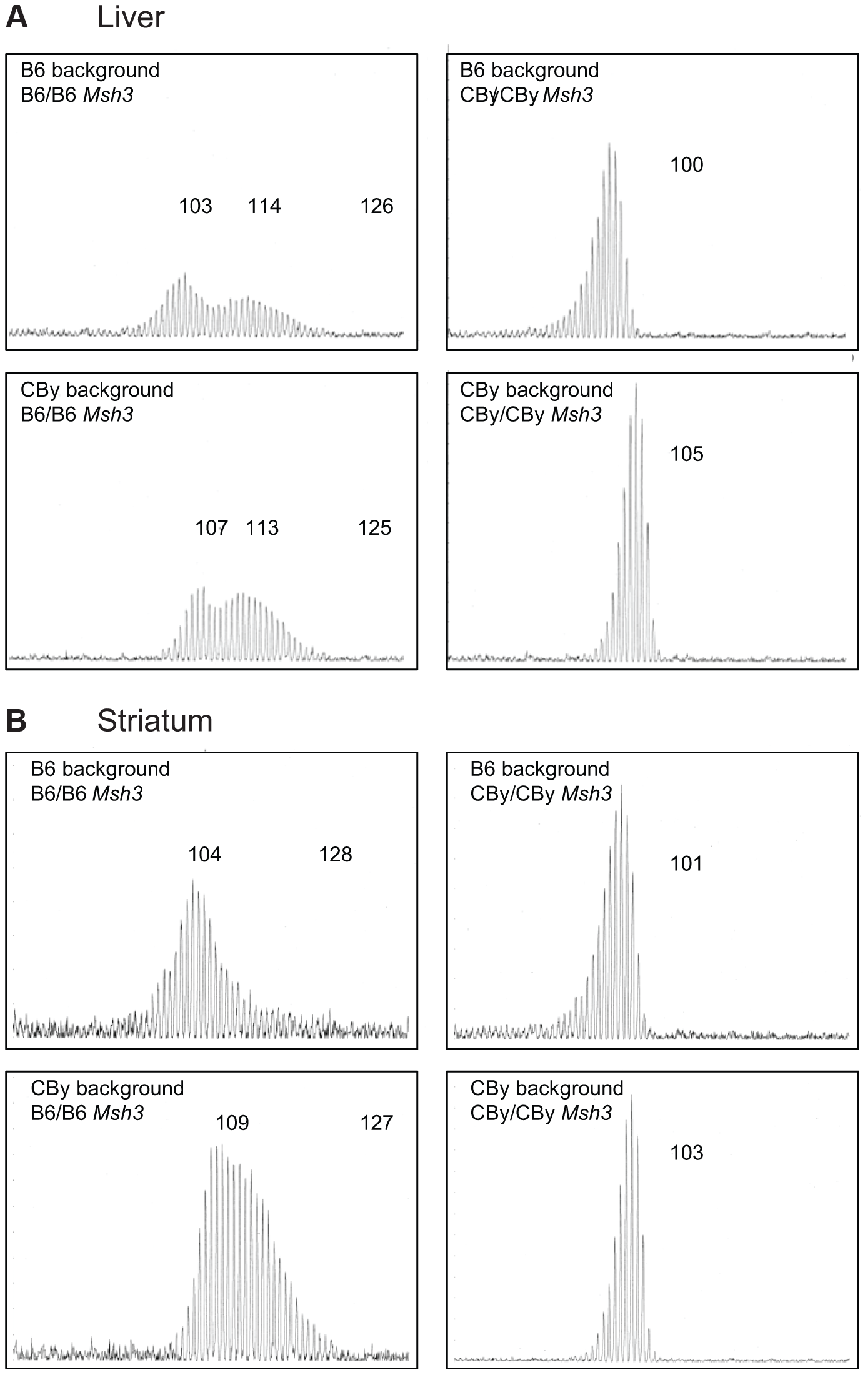 Representative CAG repeat distributions from reciprocal <i>Msh3</i> congenic lines of mice.