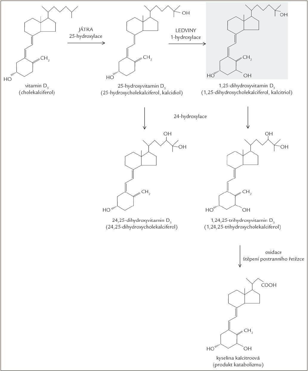 Metabolizmus vitaminu D.