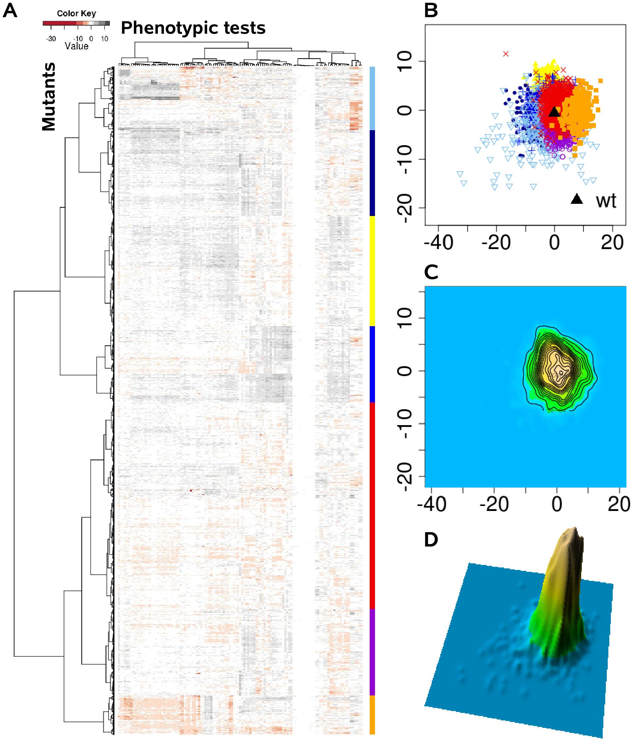 The <i>P. aeruginosa</i> phenome landscape organized by phenotypic similarity determined by 119 phenotypes of 4030 mutants.