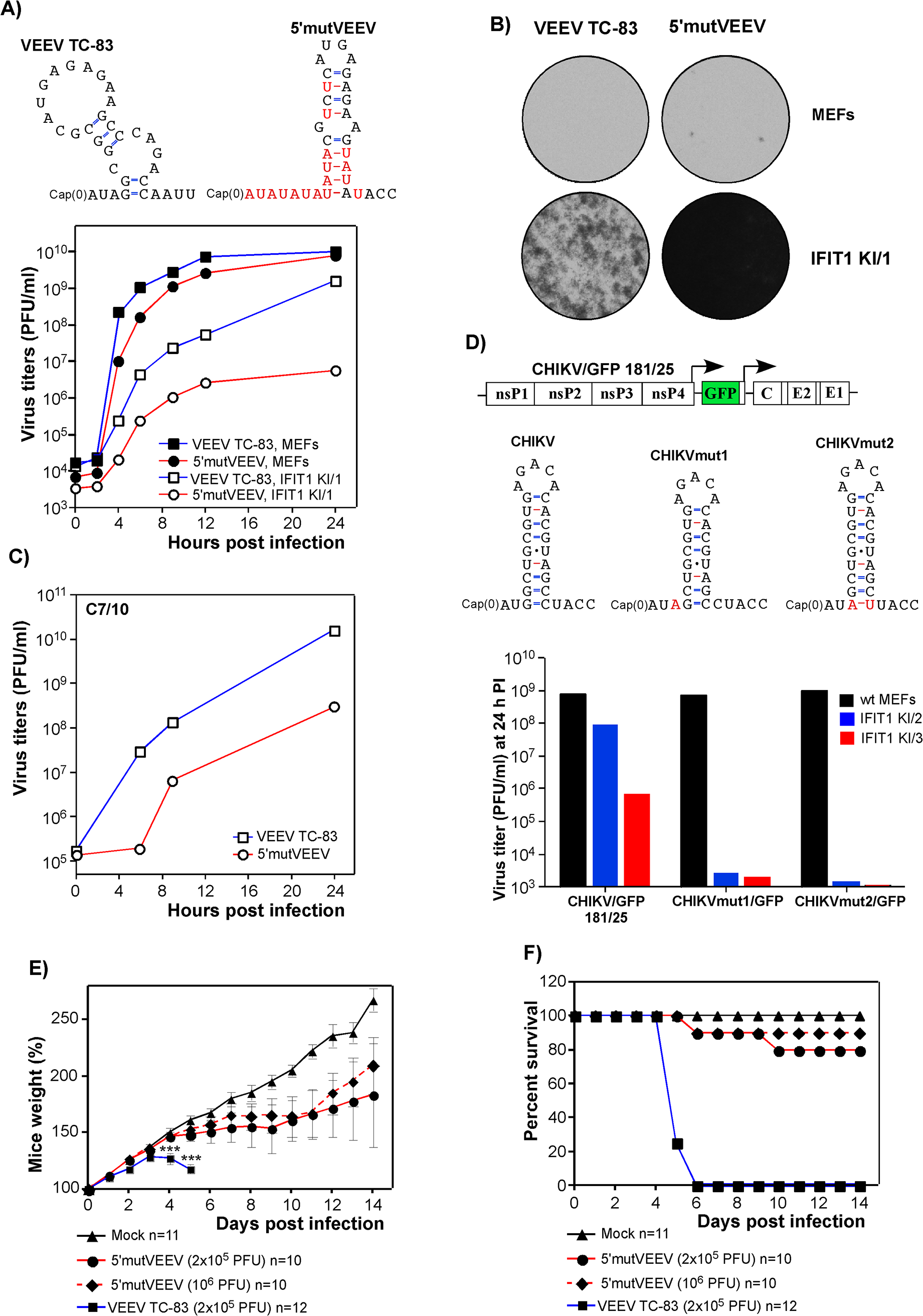 Alphavirus resistance to IFIT1 can be manipulated genetically and leads to virus attenuation.