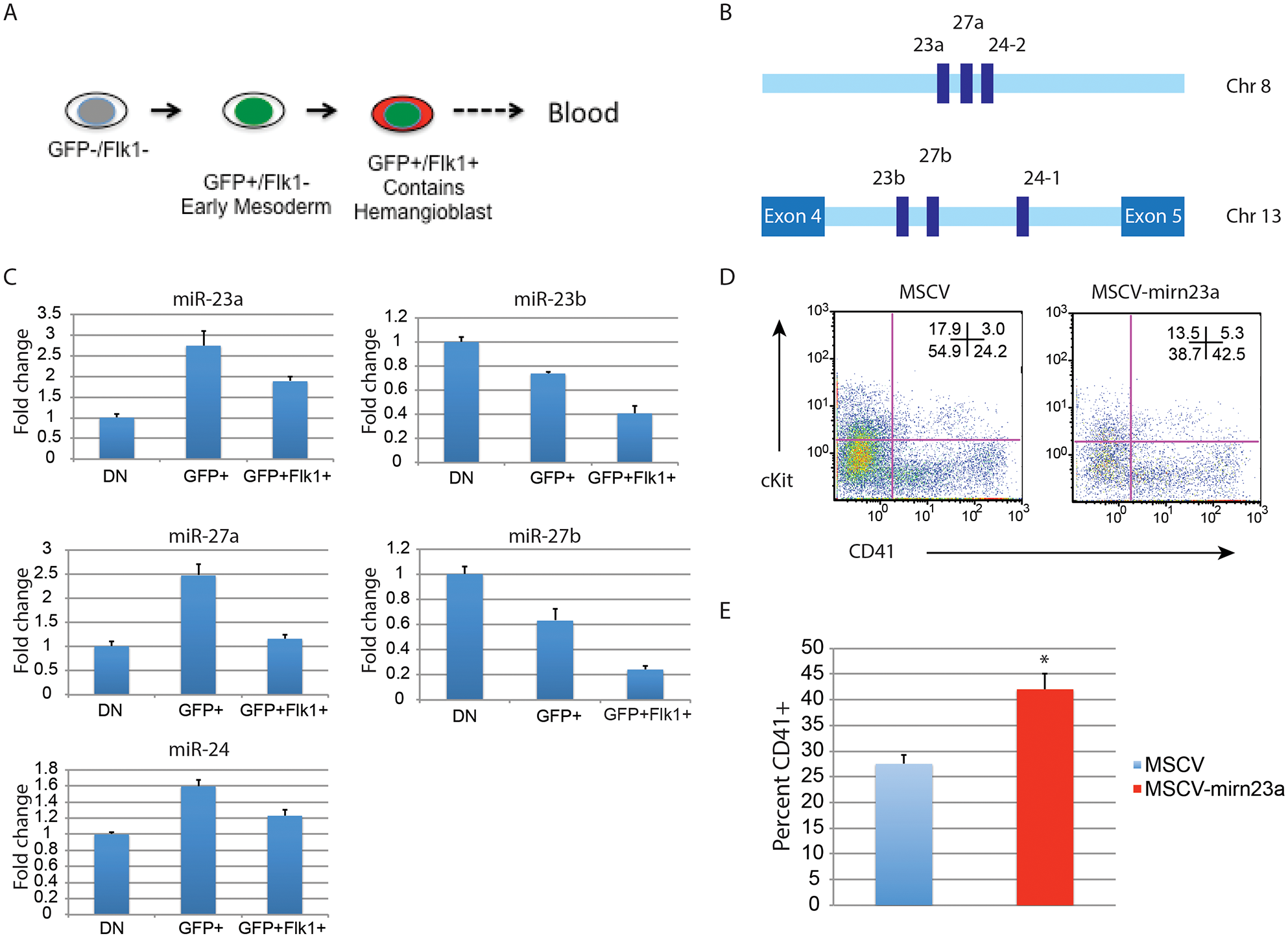 Expression of the gene encoding miR-24–2 enhances hematopoietic development in EBs.