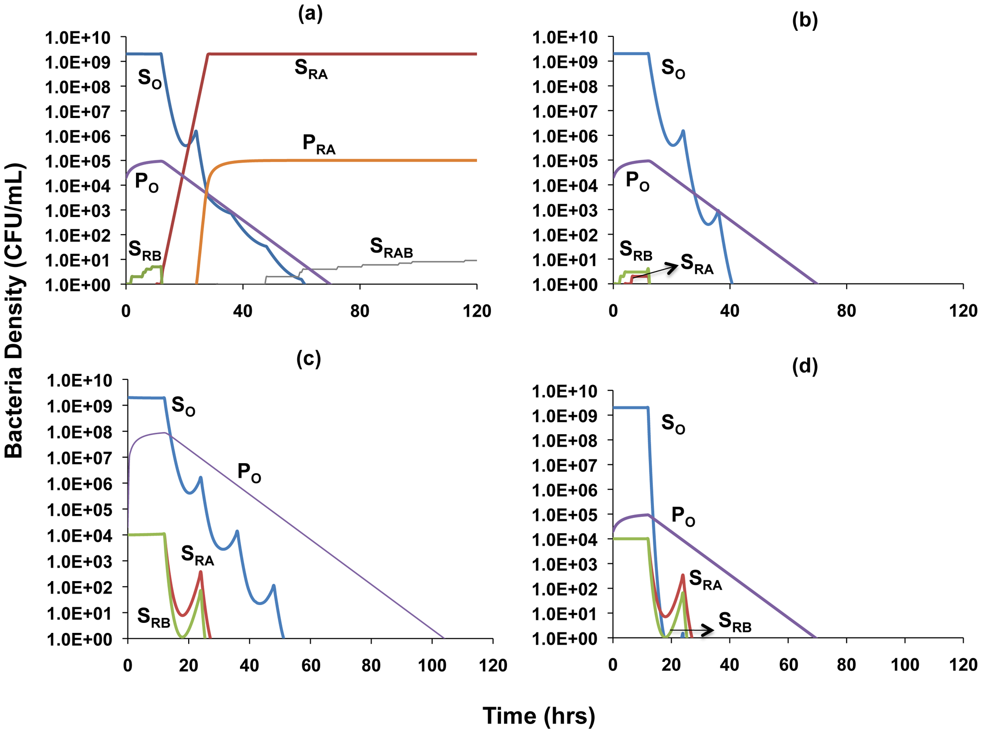 Simulation of the population dynamics of actively replicating and persister bacteria under antibiotic treatment.