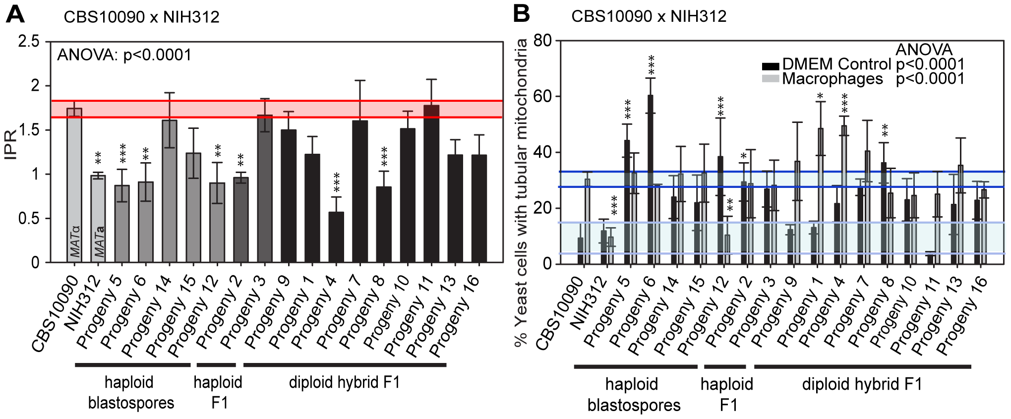 Macrophage interaction of progeny from outgroup crosses between CBS10090 and NIH312.