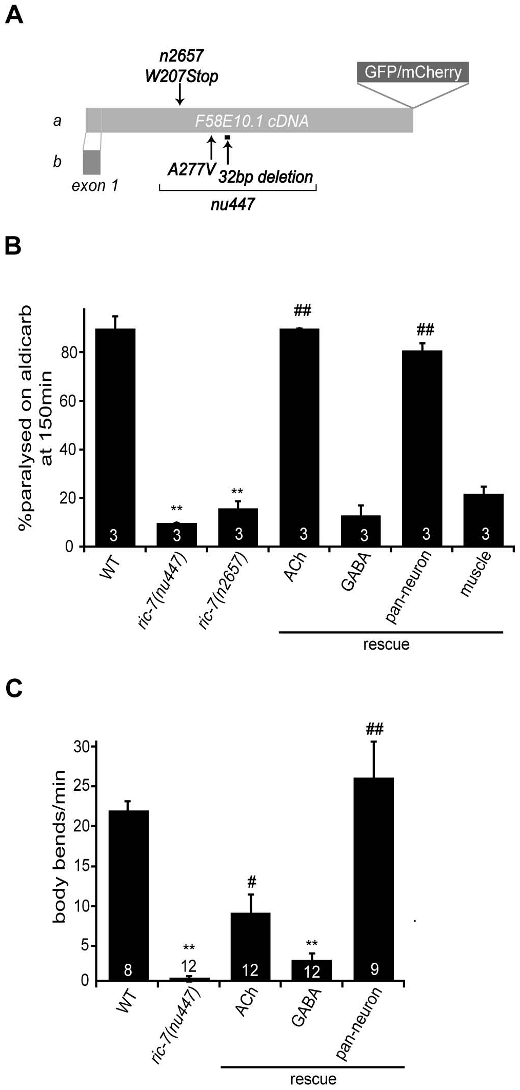 Aldicarb response and locomotion defects in <i>ric-7</i> mutants.