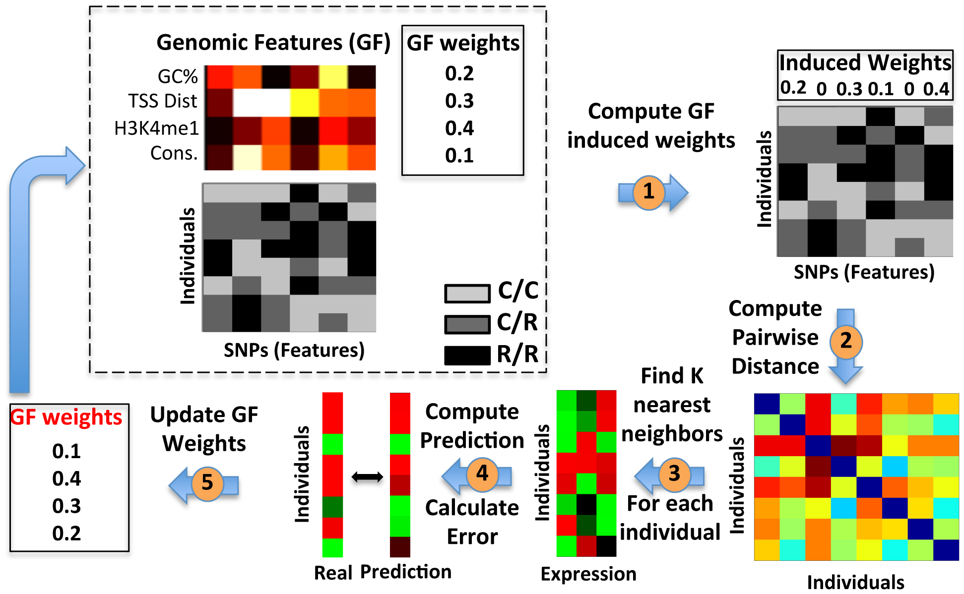Extending the K-Nearest-Neighbor algorithm to integrate genomic features.