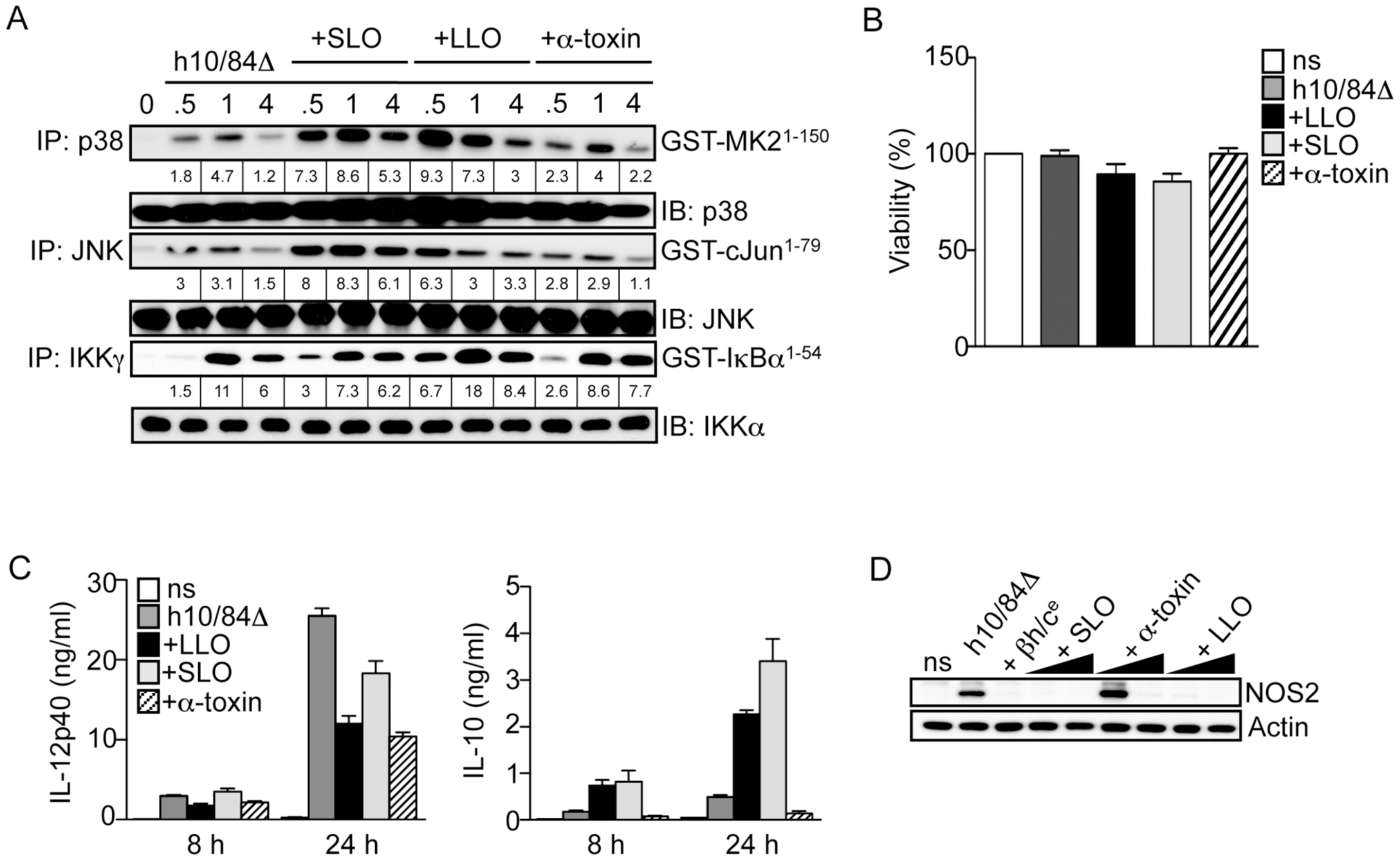 Triggering of p38-mediated IL-10 production in macrophages is not a general property of pore-forming toxins.