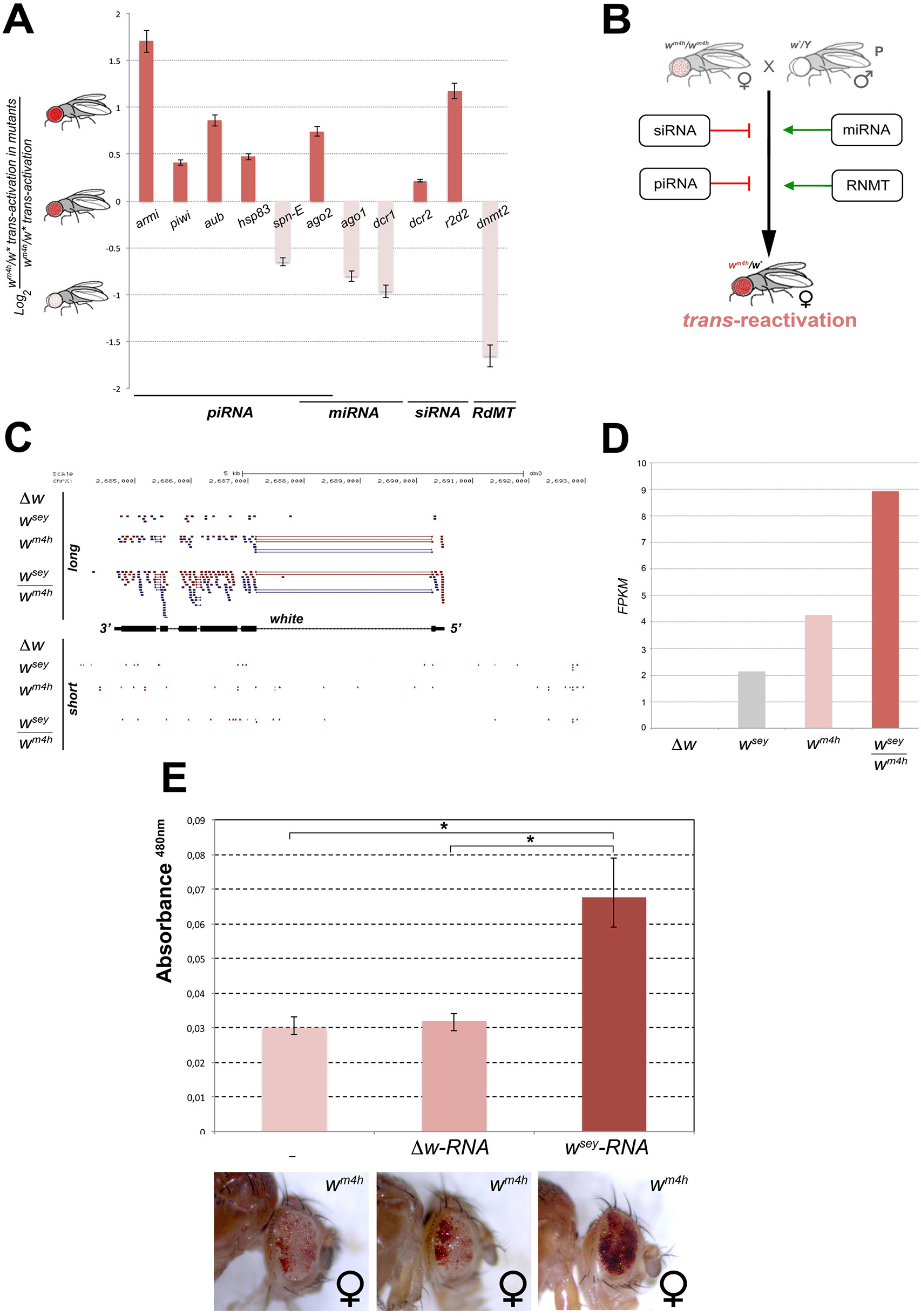 Mutations in genes encoding for factors involved in PTGS and RNA methylation influence <i>trans</i>-reactivation.