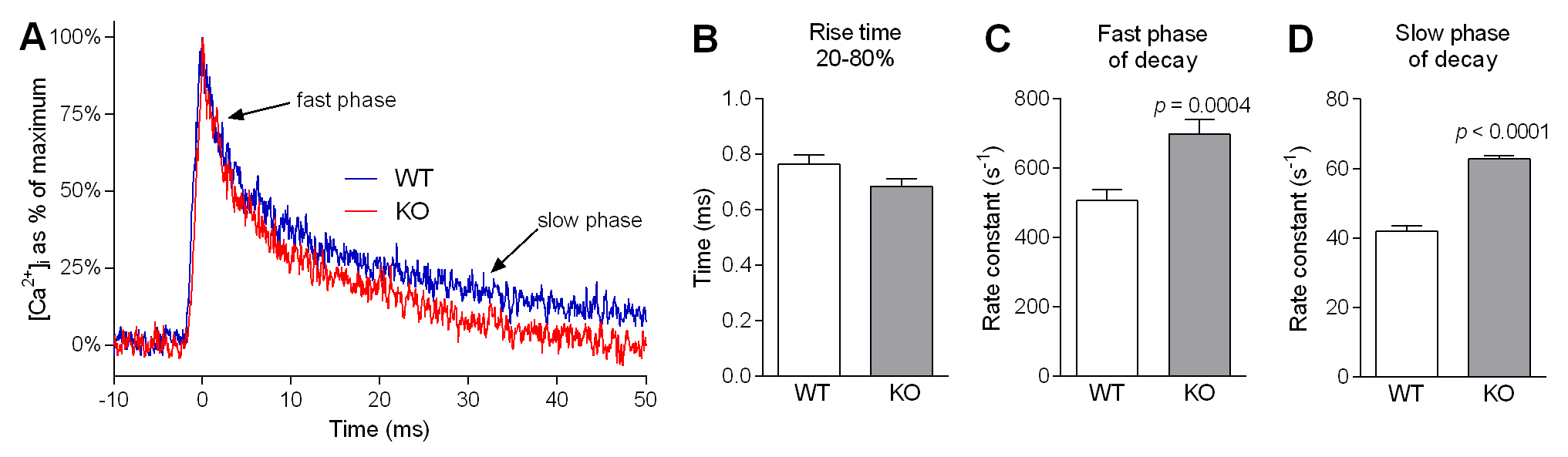 Ca<sup>2+</sup> kinetics of single twitches in FDB fibres from WT and <i>Actn3</i> KO mice.