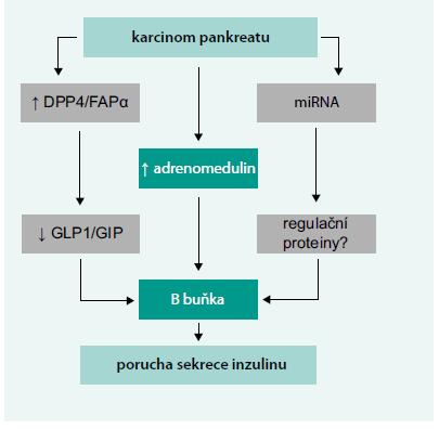 Schéma 2. Předpokládané patogenetické vztahy karcinomu pankreatu a diabetu T3c