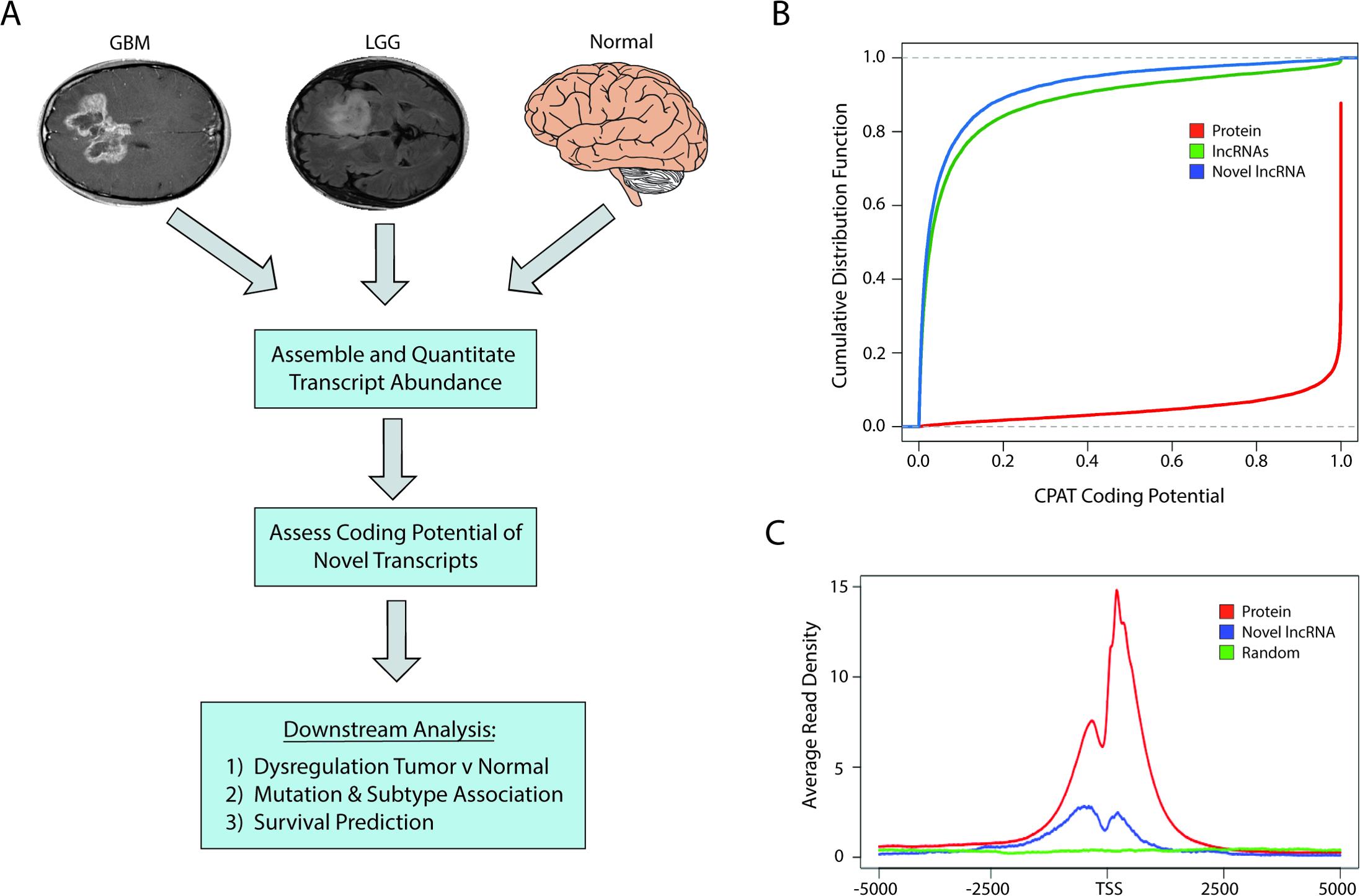 Identification of novel lncRNAs in glial tumors and normal brain RNA-seq samples.