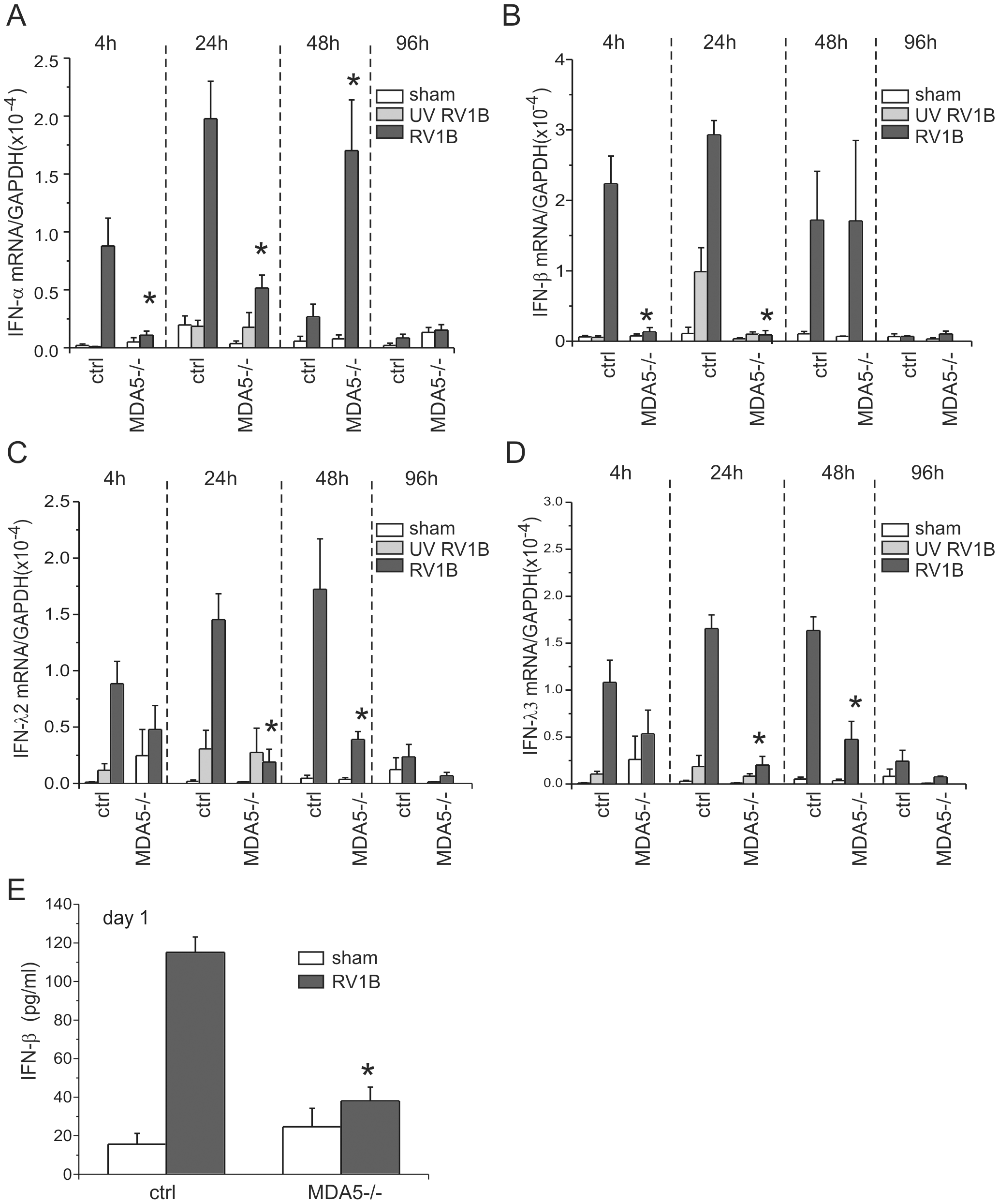 RV1B-induced expression of type I and III IFNs in MDA5−/− mice.