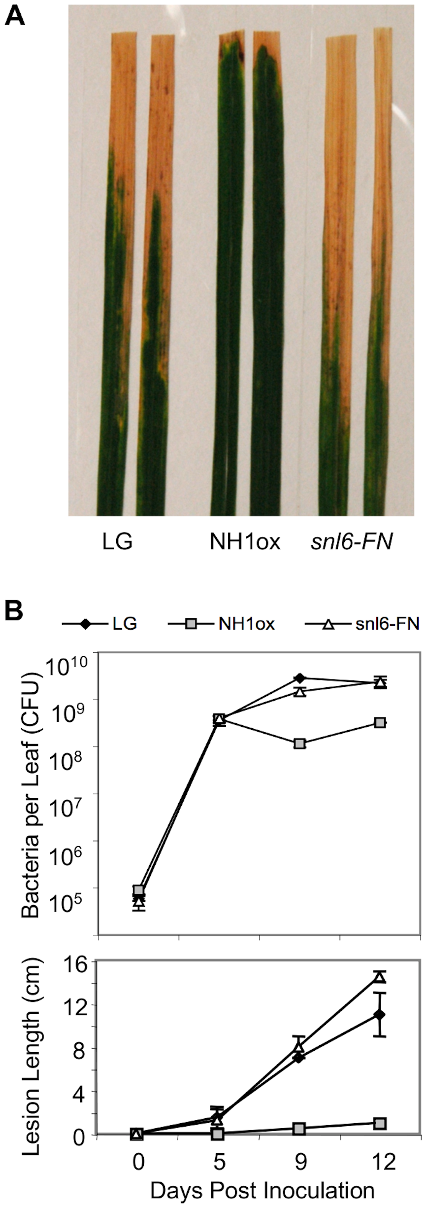 <i>Snl6</i> is required for NH1ox-mediated resistance to <i>Xoo</i>.