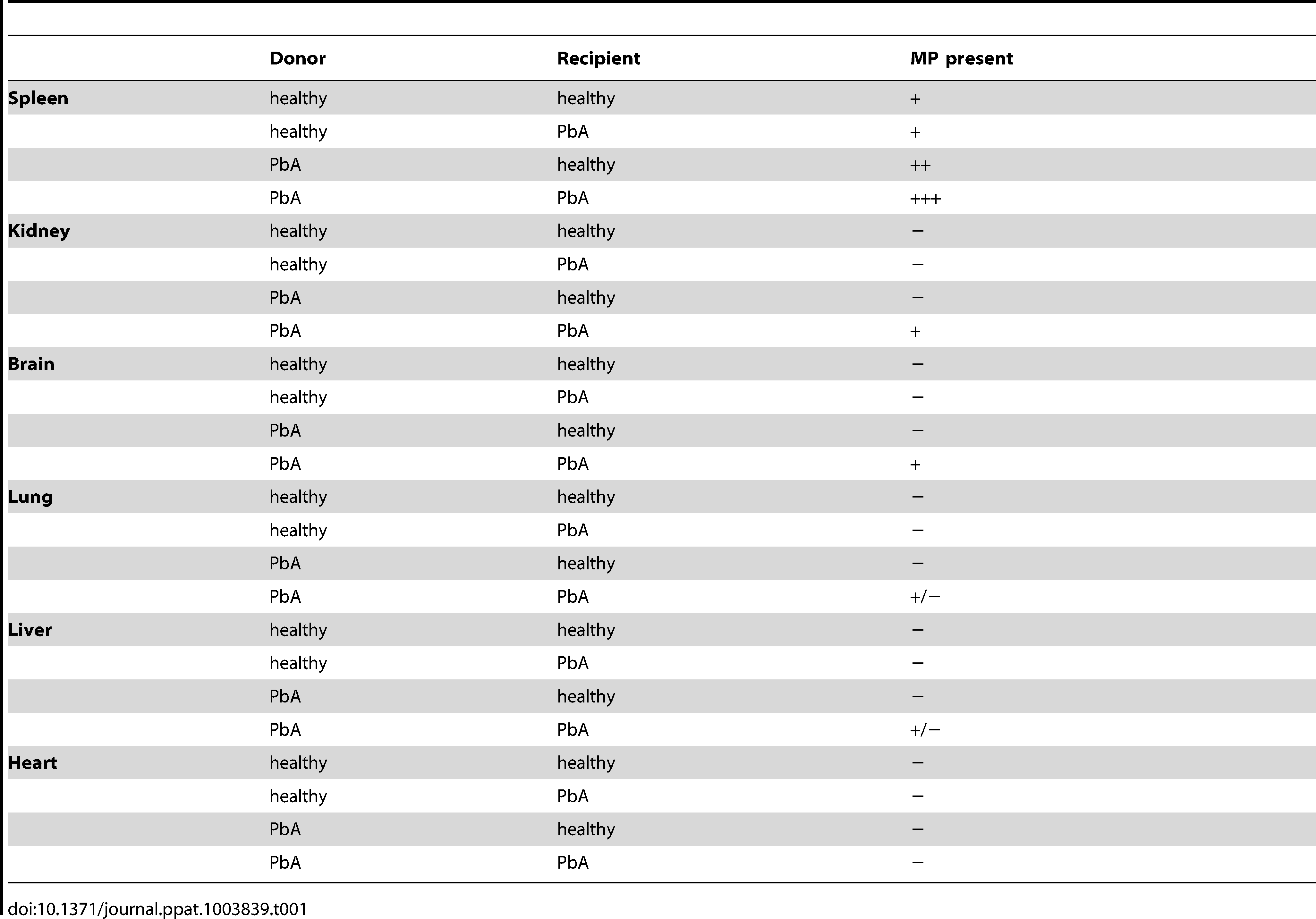 Qualitative summary of PKH67-labelled MP distribution within the tissue of recipient mice following adoptive transfer.