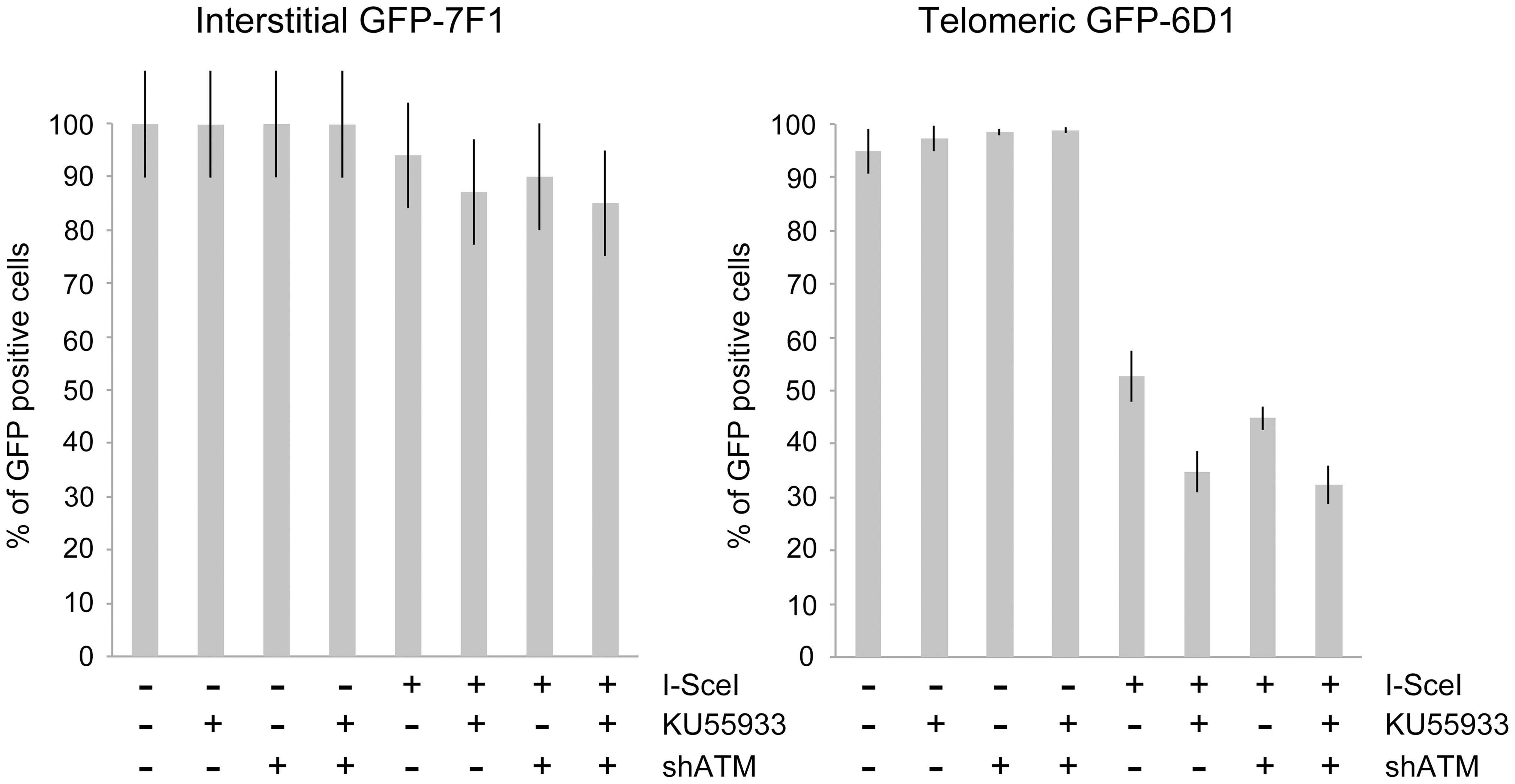 The effect of ATM deficiency on large deletions at interstitial and telomeric DSBs.