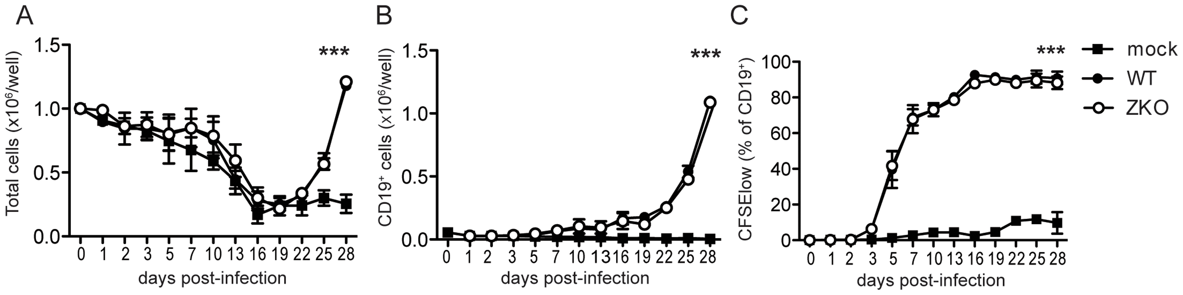 Lytic replication does not significantly contribute to EBV transformation <i>in vitro</i>.