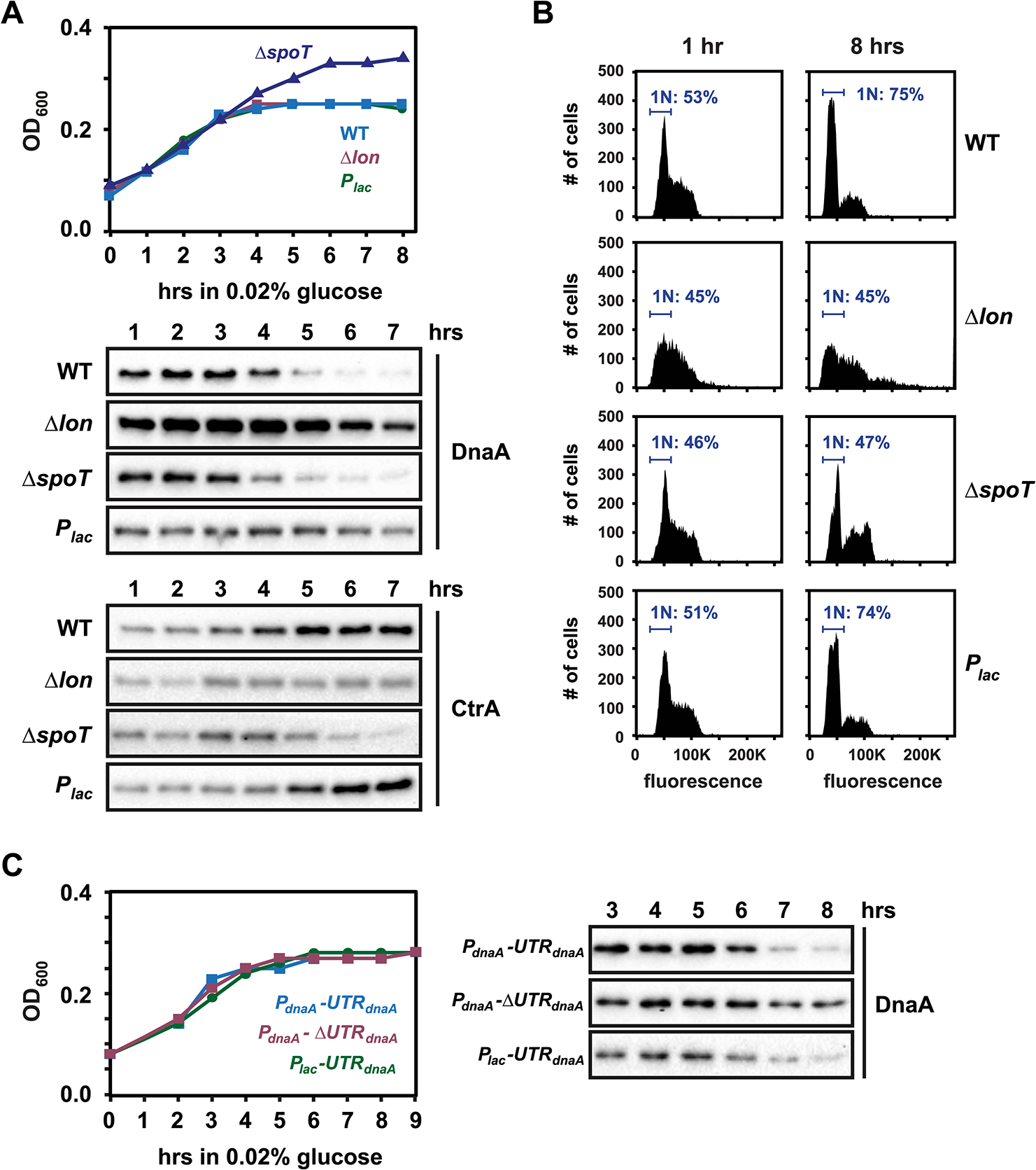 Regulated DnaA synthesis and Lon-mediated degradation are required to eliminate DnaA upon carbon exhaustion.