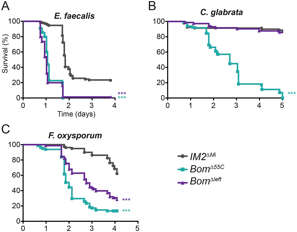 Loss of a subset of the 55C <i>Bom</i> genes has an intermediate effect on survival.