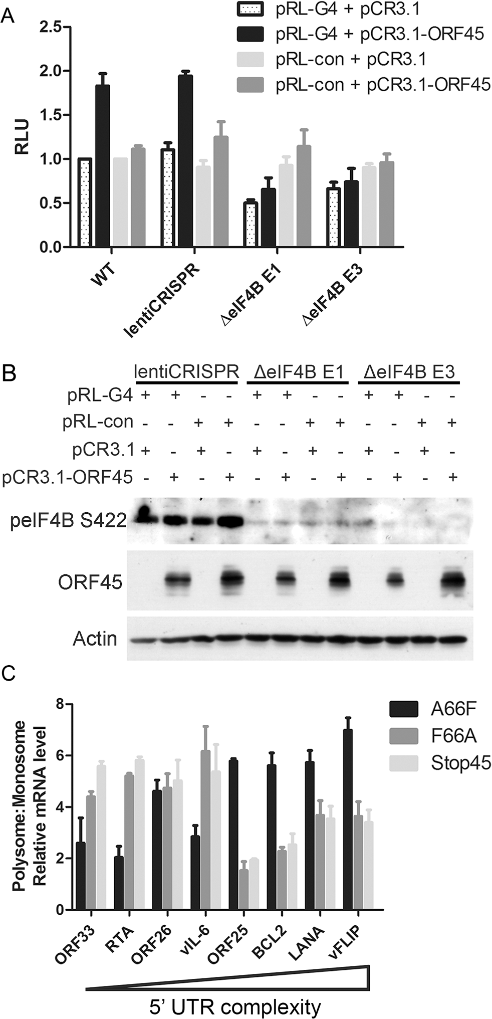 ORF45/eIF4B-dependent translational control of mRNAs with complex 5' UTR structure.