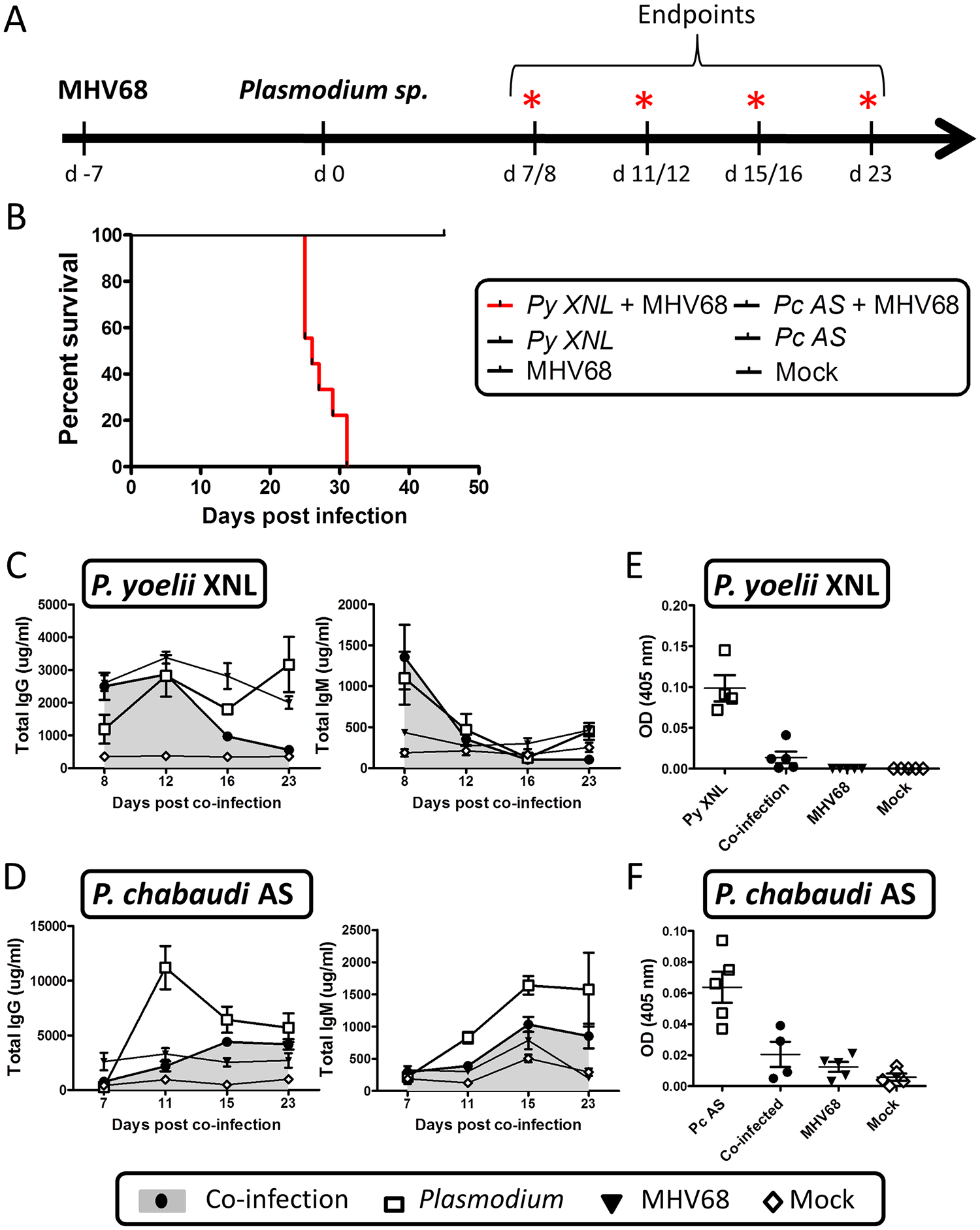 MHV68 co-infection with the non-lethal <i>P</i>. <i>yoelii</i> XNL in C57BL/6 results in lethal malarial disease and suppressed <i>Plasmodium</i> specific IgG response.