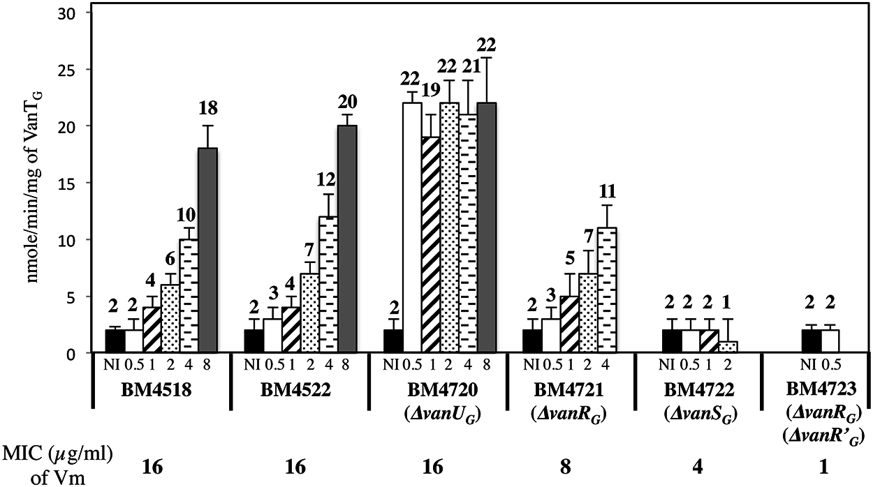 VanT<sub>G</sub> racemase specific activity in membrane extracts from clinical isolate BM4518, transconjugant BM4522, and its deletant derivatives.