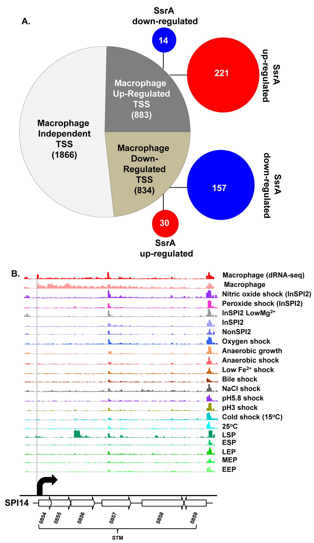 The primary transcriptome of intra-macrophage <i>Salmonella</i>.