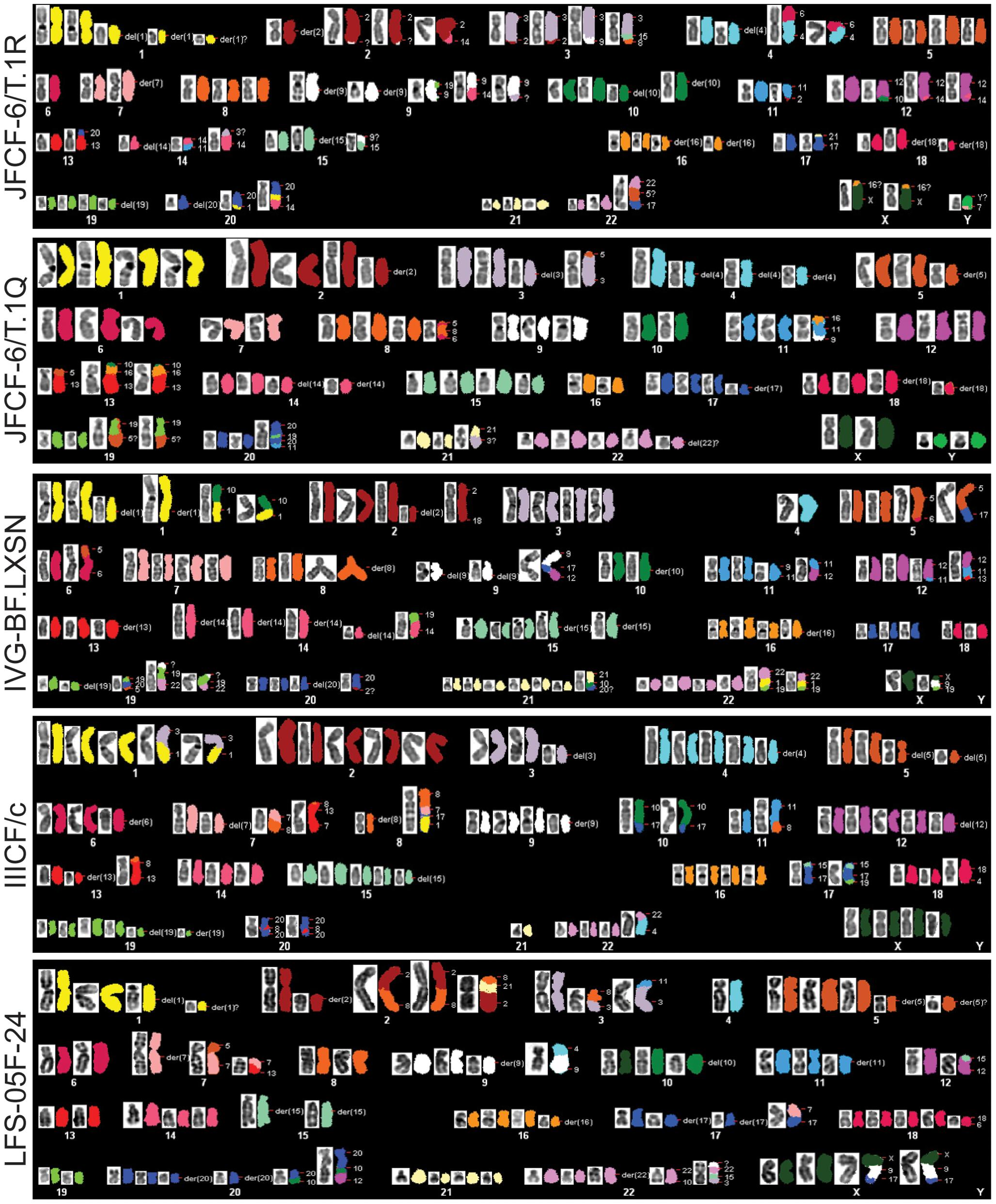 Abnormal karyotypes in ALT lines.